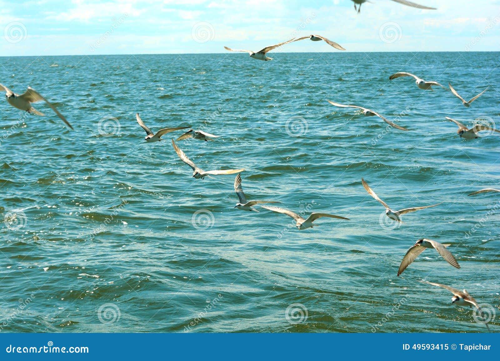 Flock av Seagulls