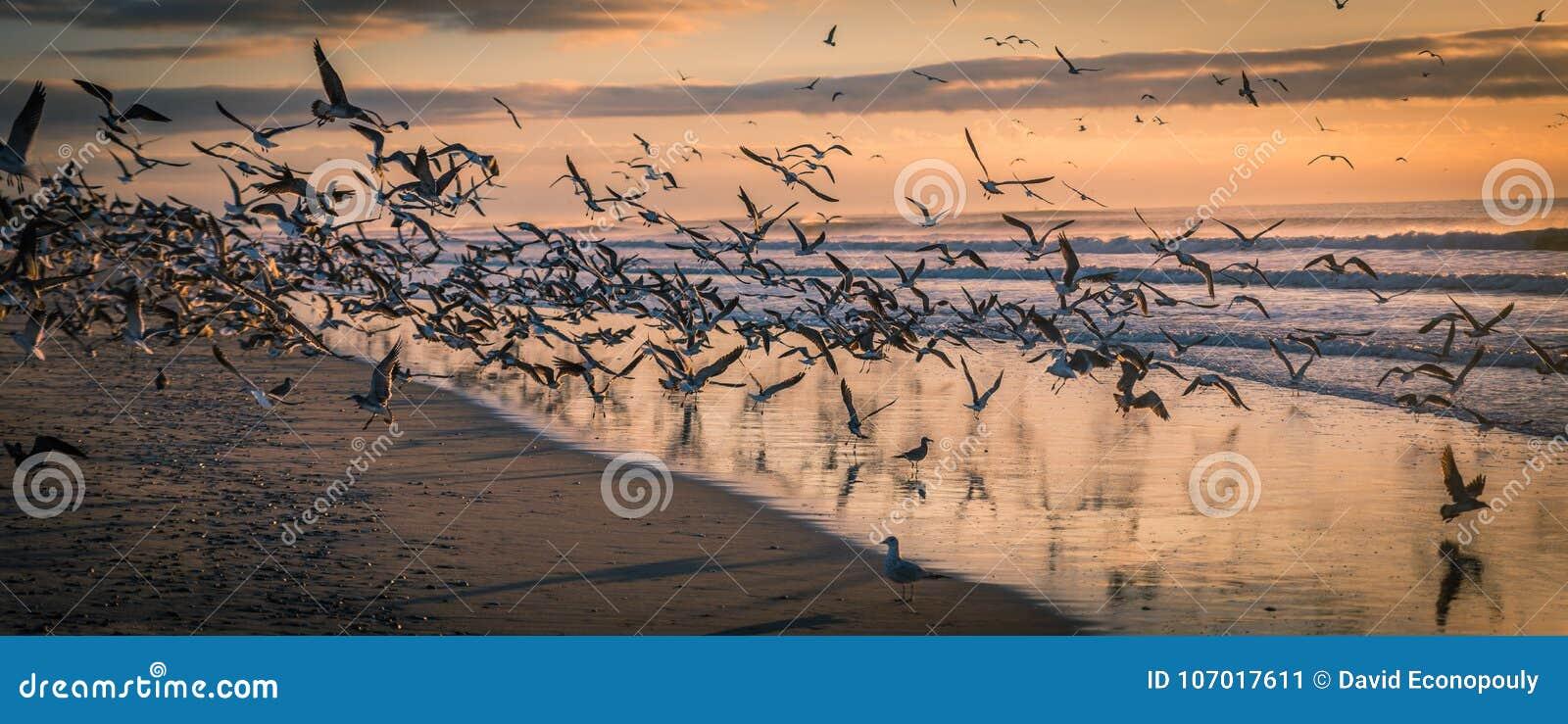 Flock av Seagulls på stranden på solnedgången