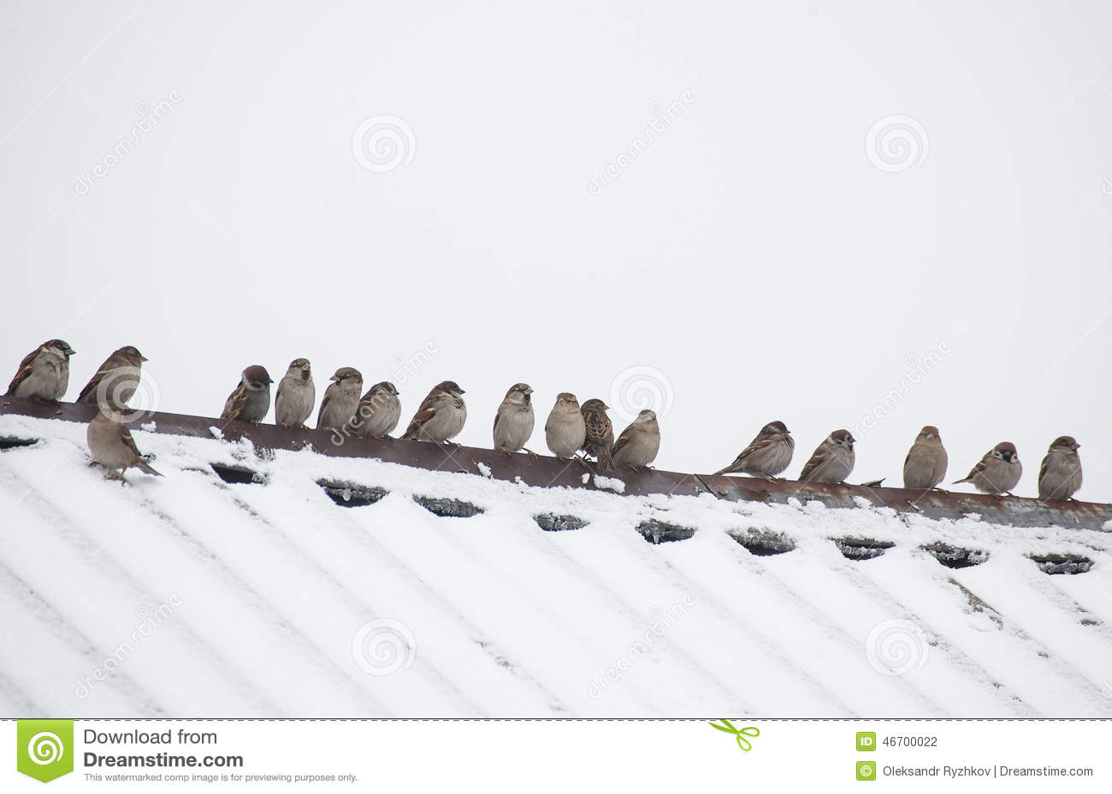 Flock av sparvar som sitter på taket