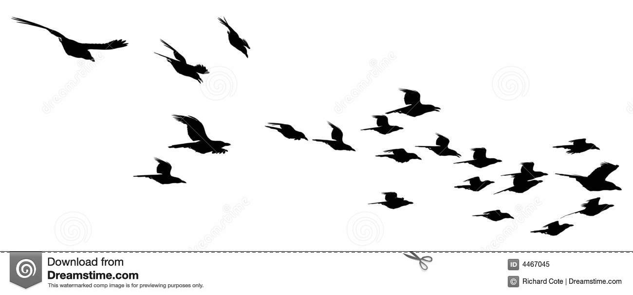Silhouetted flock of b...