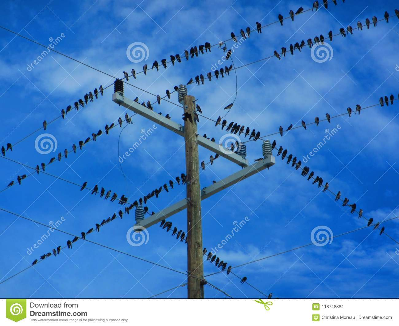 flock of birds on a electrical wires stock photo image of light rh dreamstime com Electrical Wire Size Chart Electrical Plug