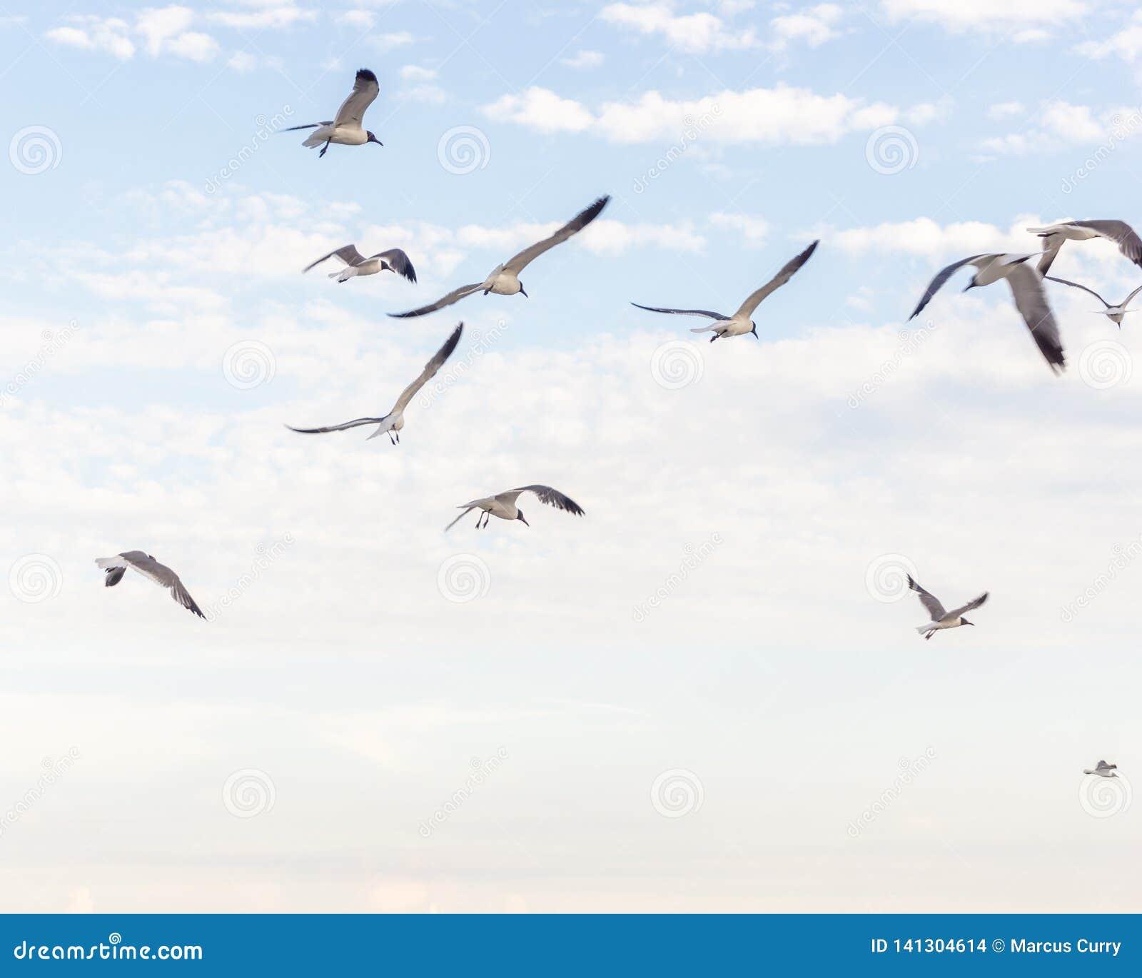 Bird flying high in sky