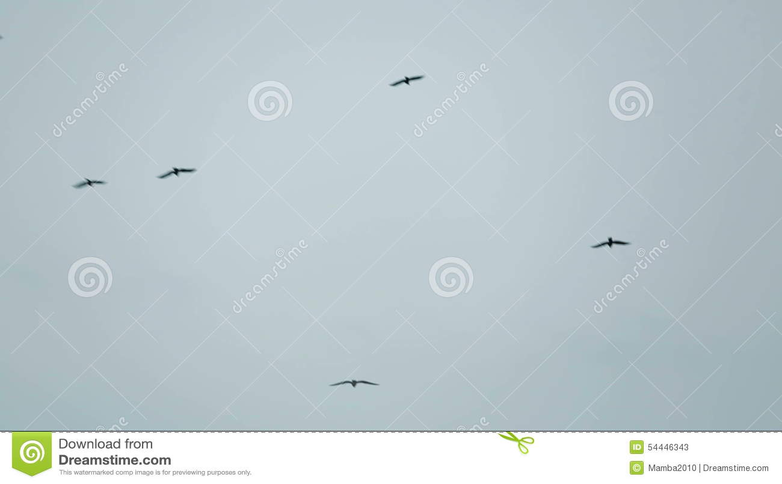 Flock Of Black Birds Flying Free In The Sky Stock Video