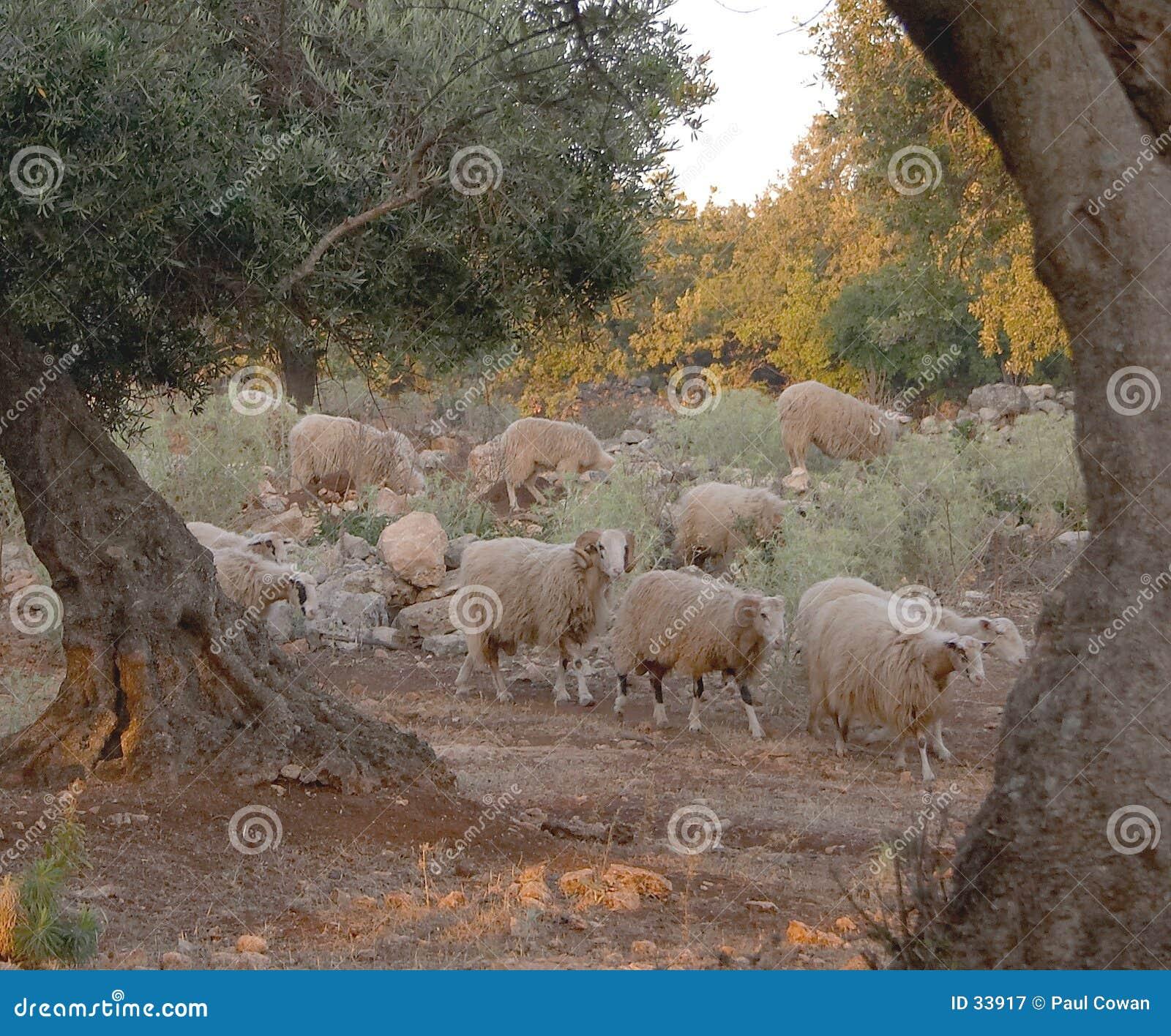 Flock at dawn