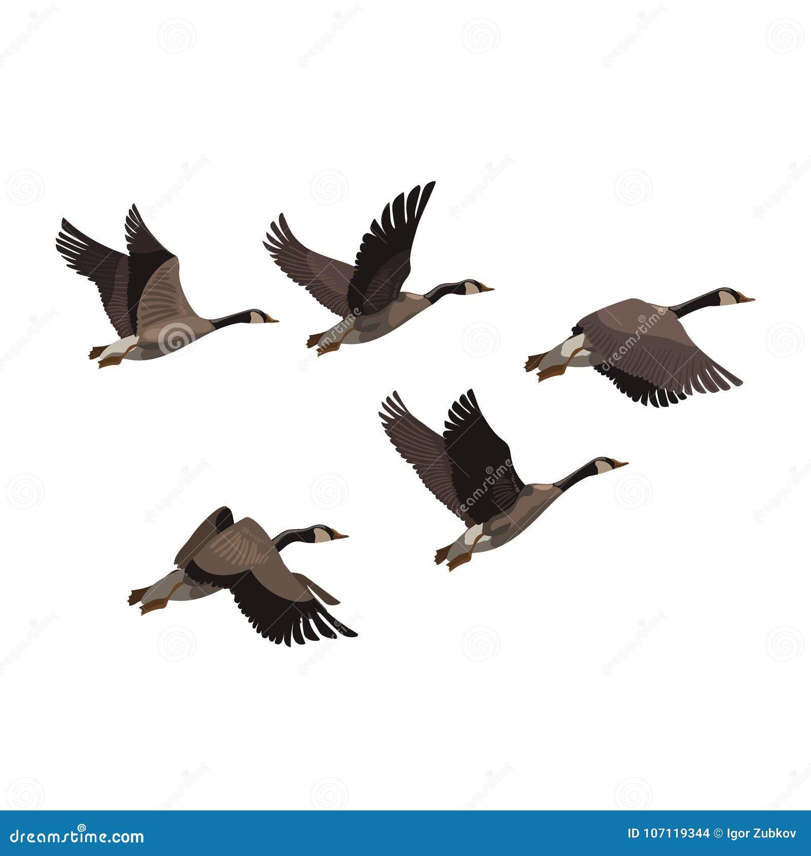 A Flock Of Ducks. A Cartoon Flock Of Birds. Vector Stock ...  Flock