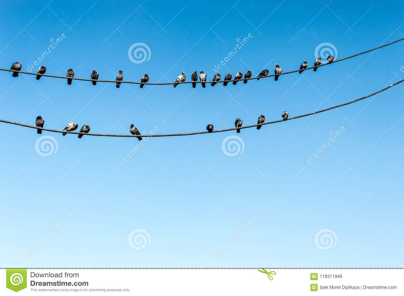 Group Of Pigeons Perching On Electric Wires With Blue Sky As ...