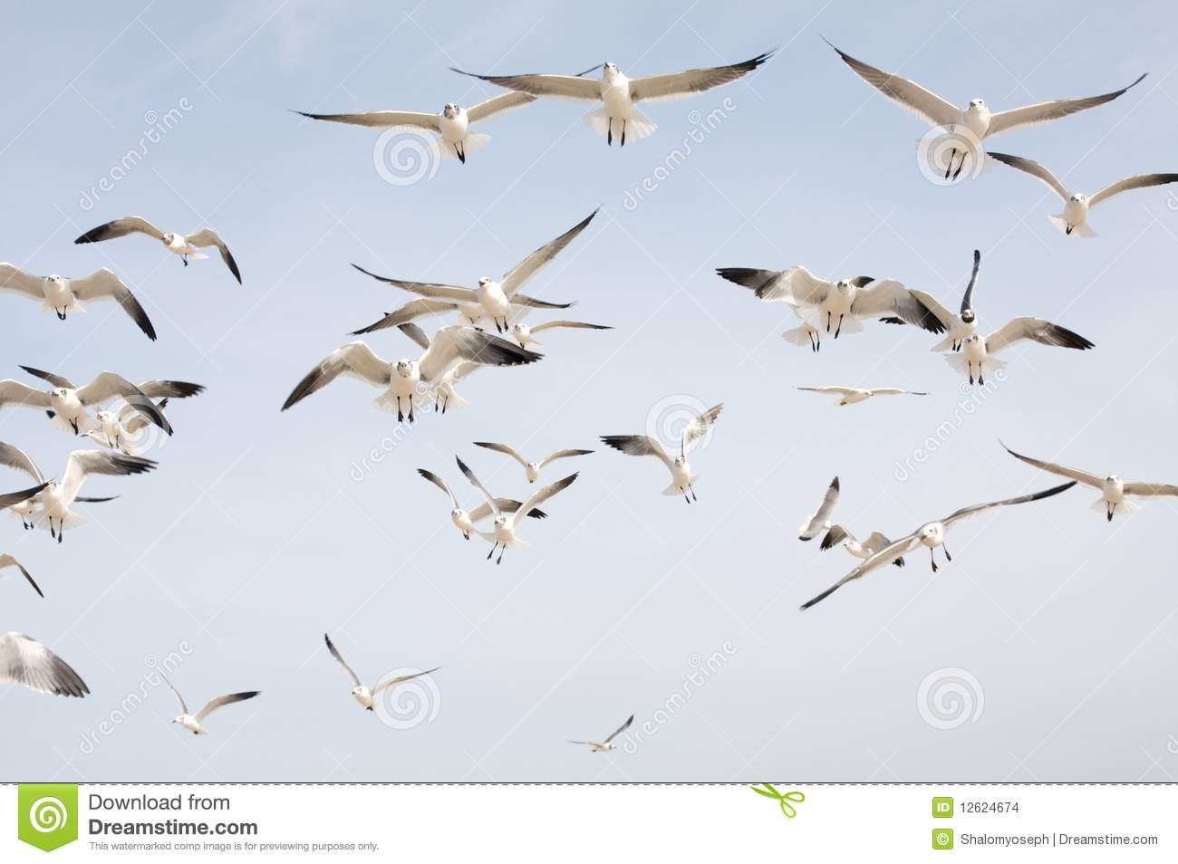 A Flock Of Seagulls The Singles
