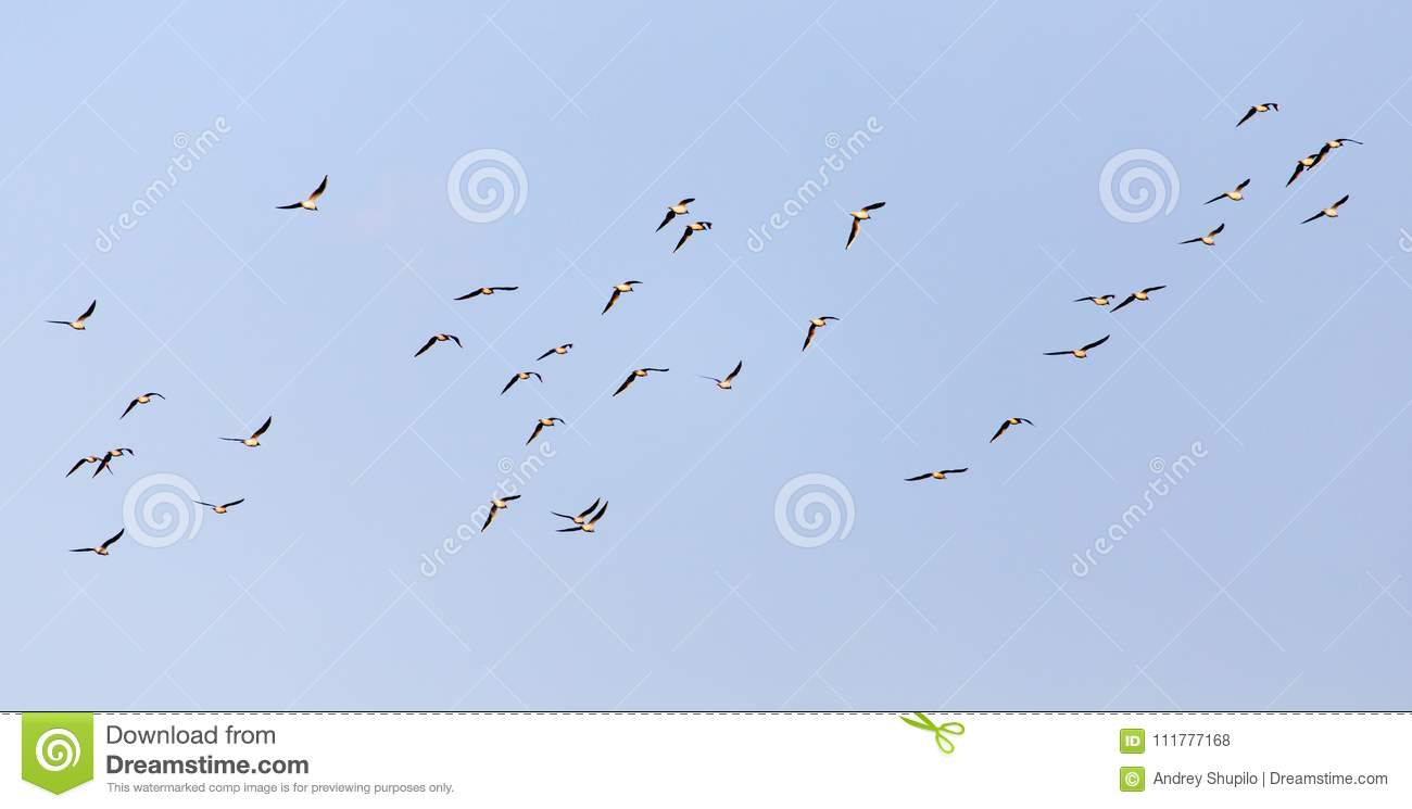 A flock of seagulls against a blue sky