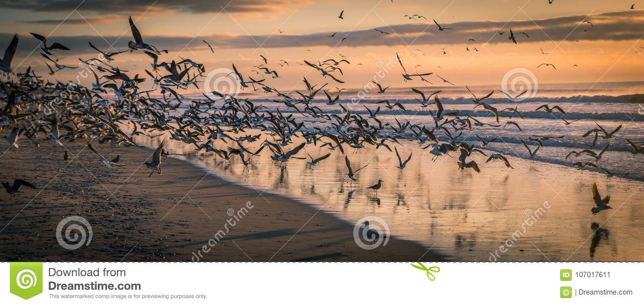 Flock of Seagulls at beach at sunset