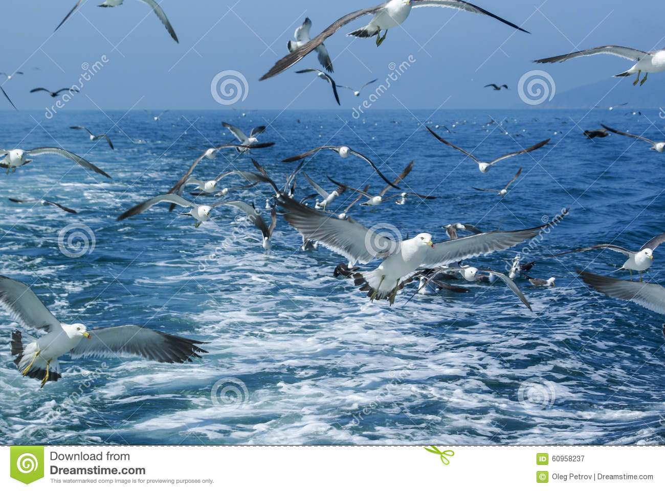 Flock Of Seagulls Flying Over Sea Behind The Ship. Stock