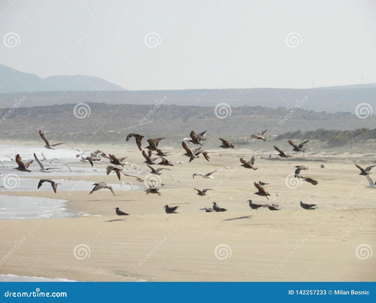 Flock of Seagulls taking flight