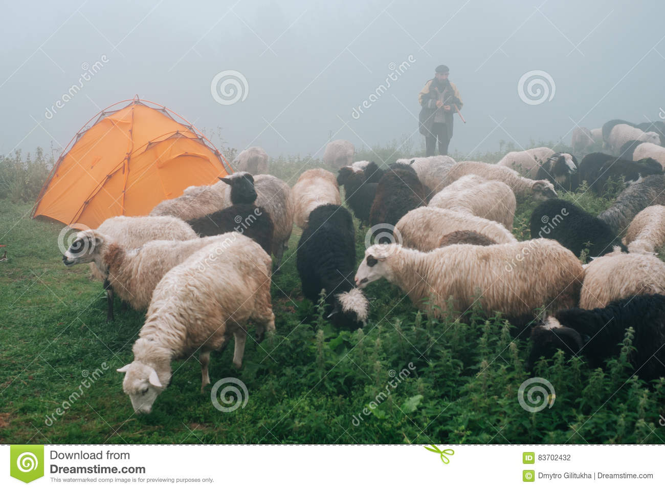 Flock Of Ships Near Tourist Camp In Foggy Mountains Editorial Photography