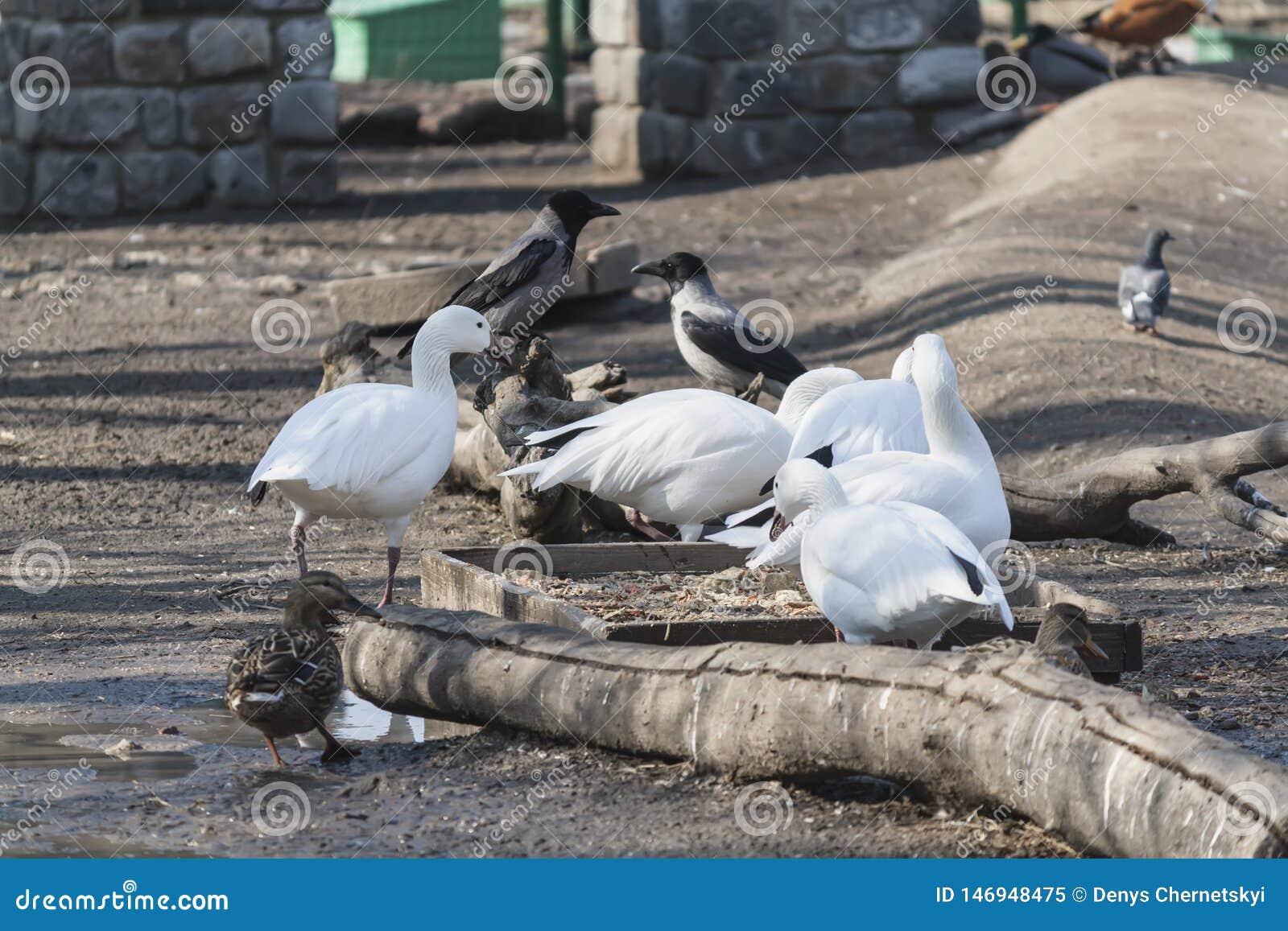 A flock of wild birds