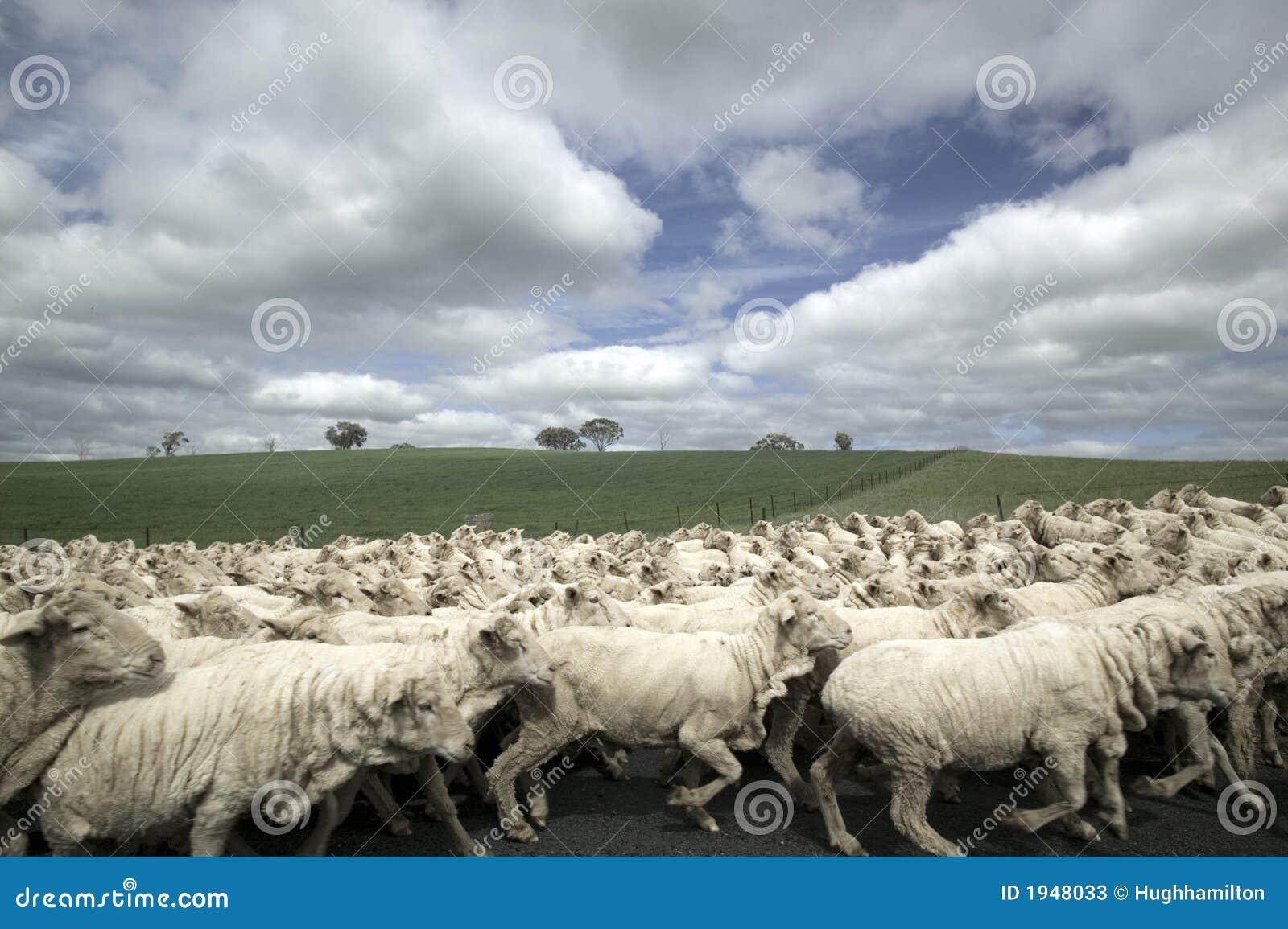 Flockfår