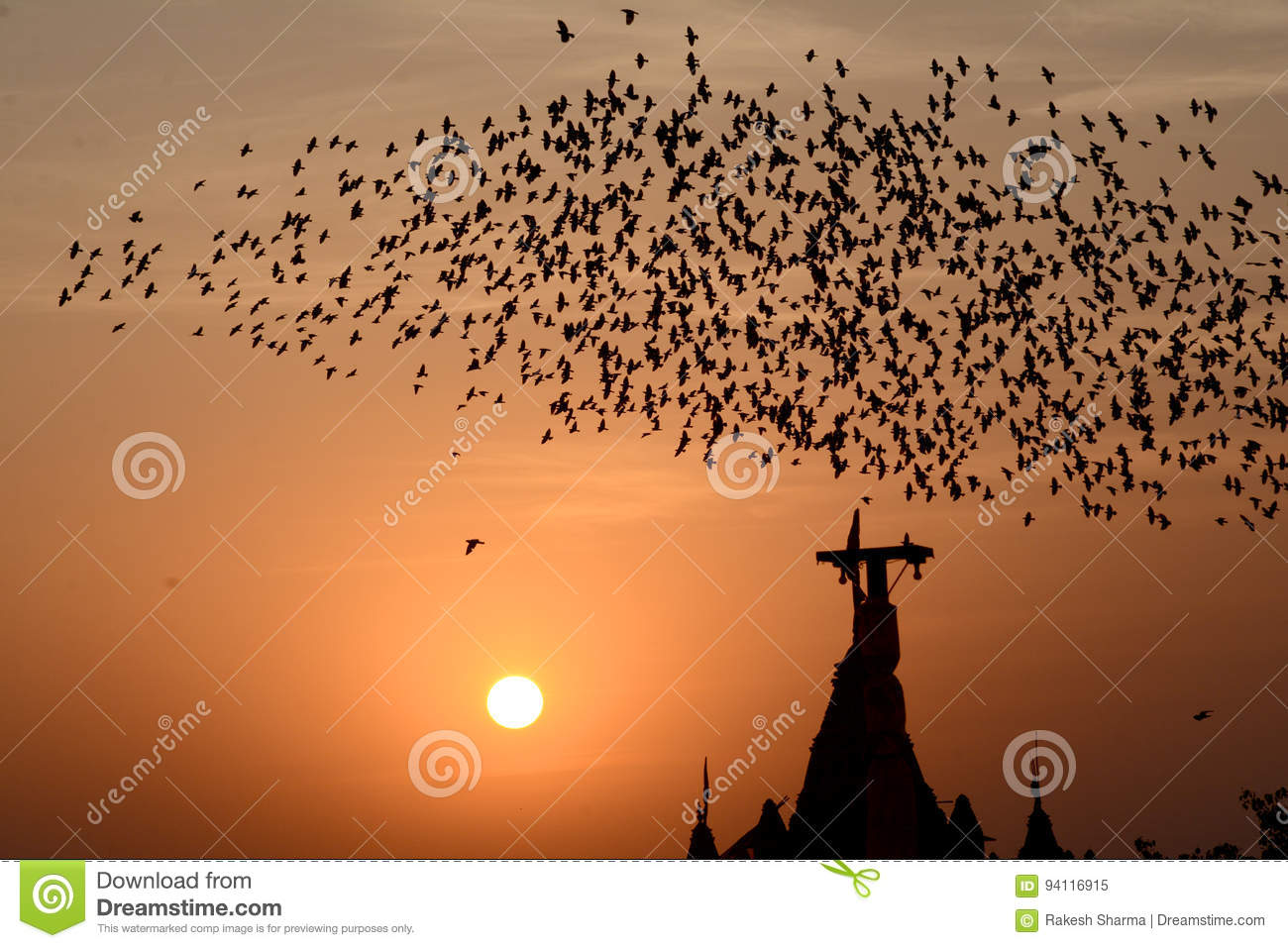 Flocking behavior of Starlings Birds in Bikaner