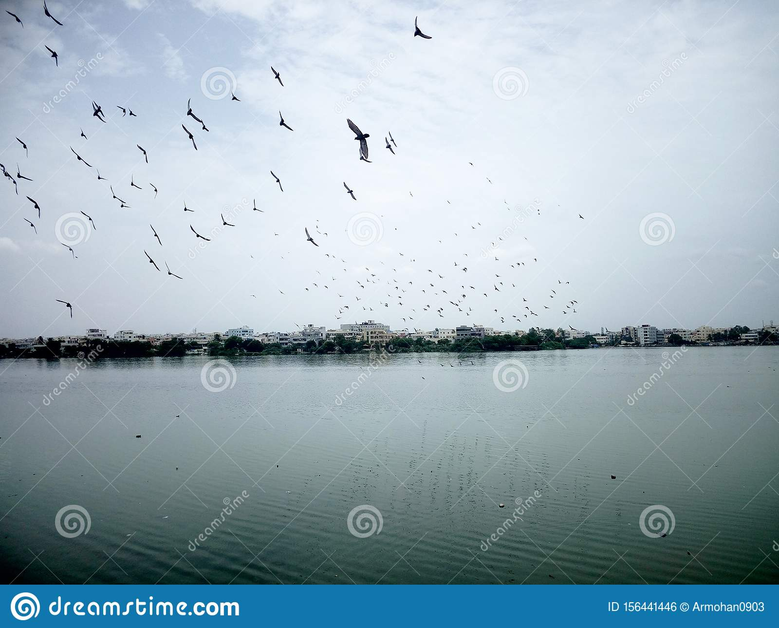 Flocking birds over a Lake.