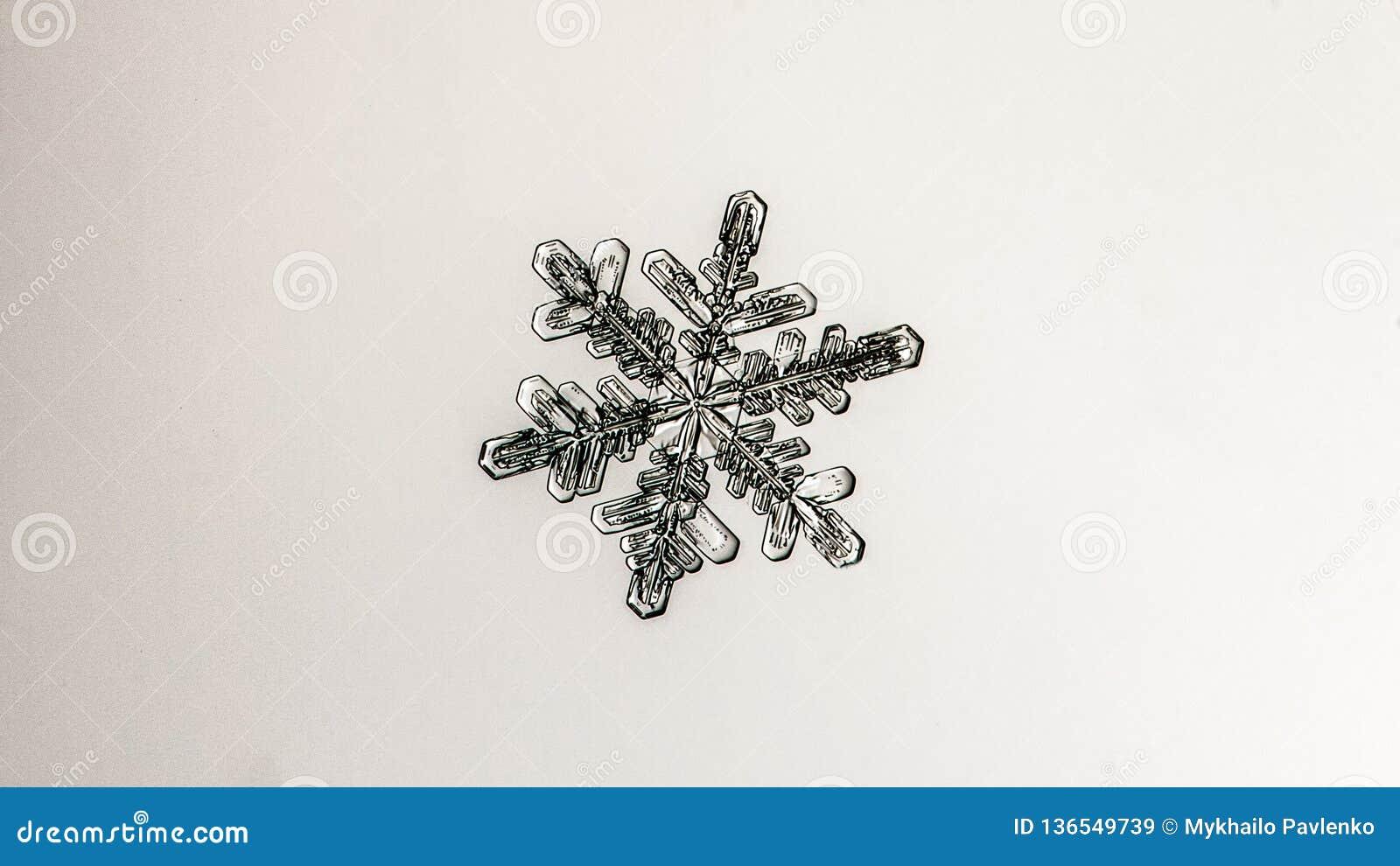 Floco bonito da neve em um fim branco claro do fundo acima