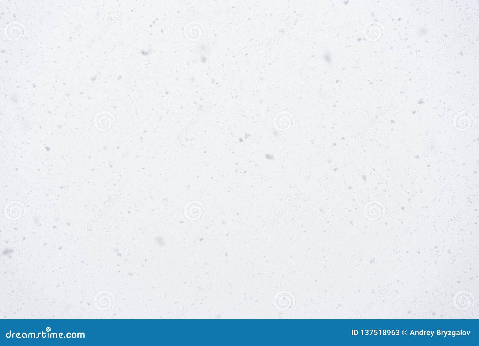 Flocos de neve de queda reais no fundo claro, tempo da tempestade de neve, chuveiro de neve natural no dia de inverno, foco macio