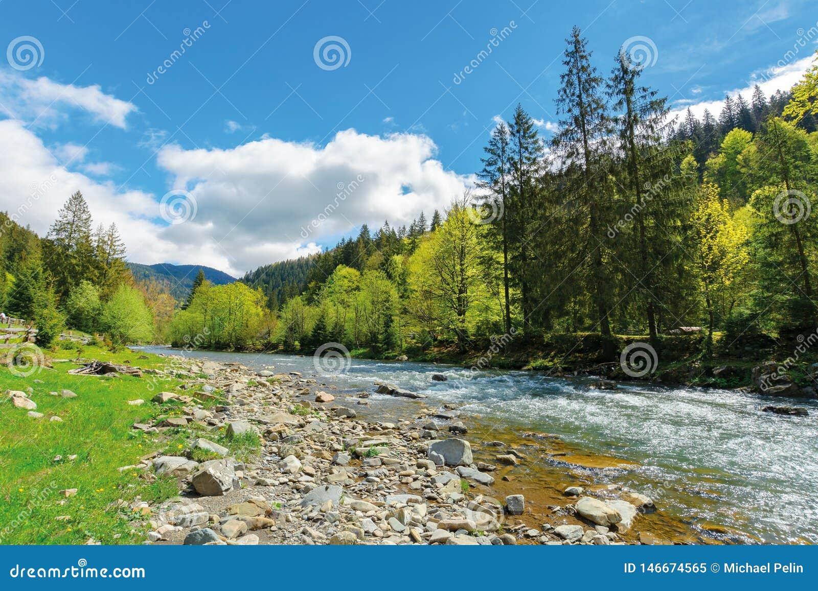 Flod bland skogen i pittoreska Carpathians