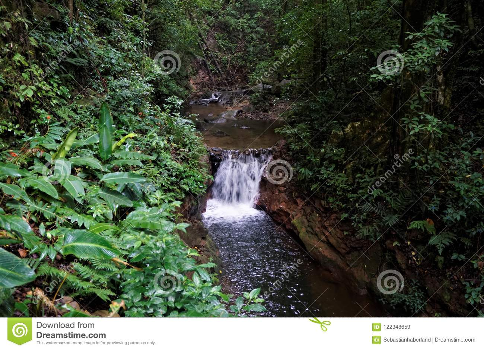 Flod i den Curi Cancha reserven, Monteverde