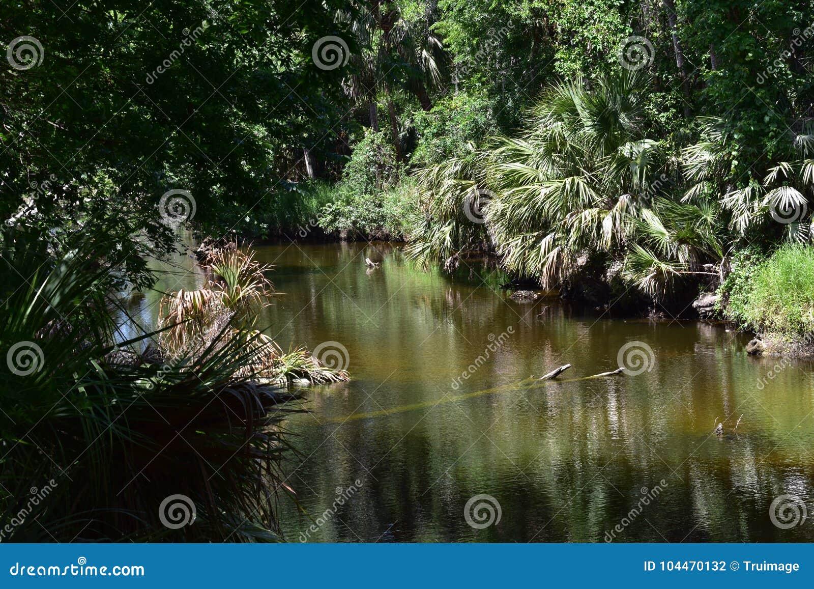 Flod och tjock buske