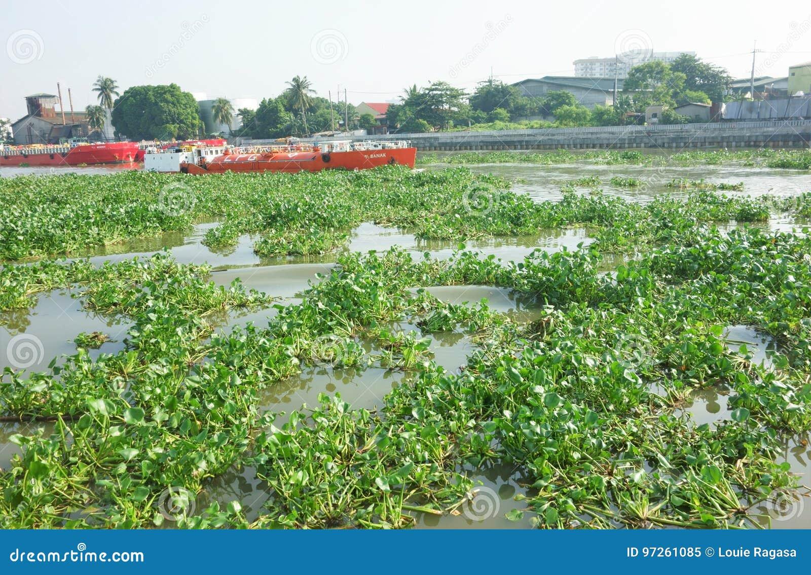 Flod som fylls med näckrors