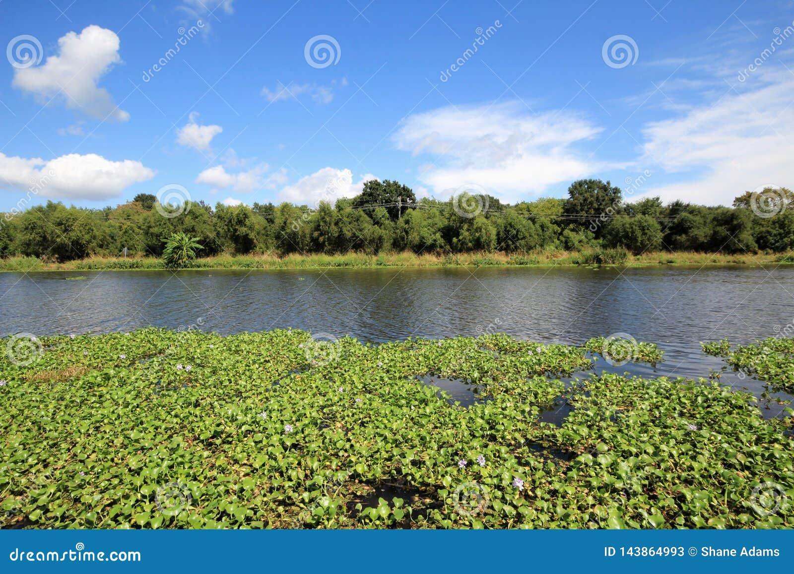 Flodarm Lafourche, Louisiana