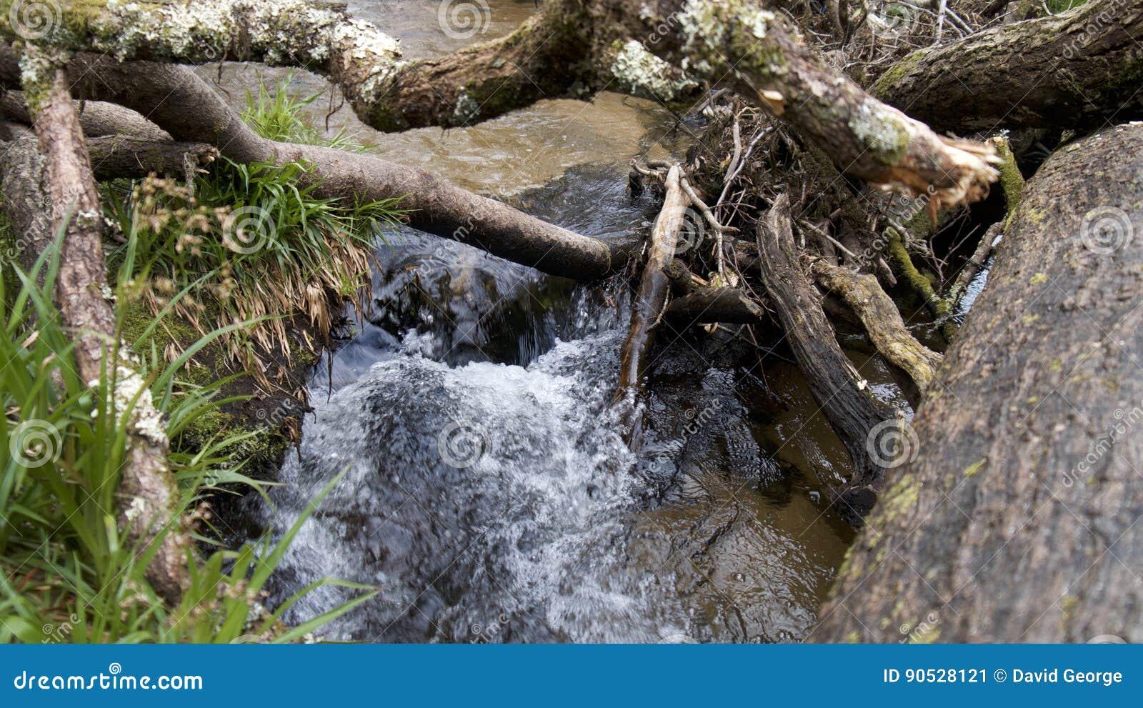 Floden Fowey, Golitha nedgångar, Bodmin hed, Cornwall, UK