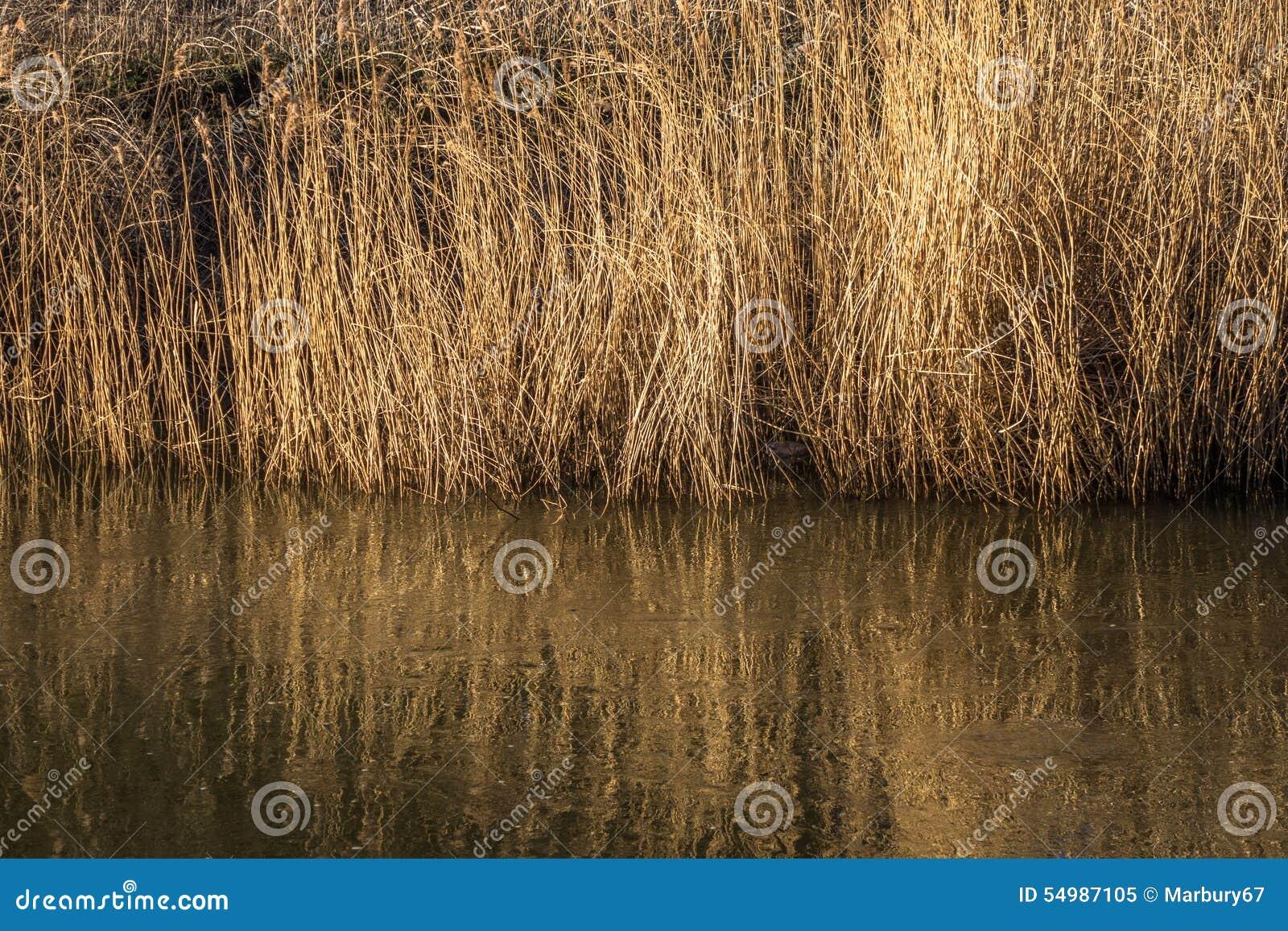 Flodgräs