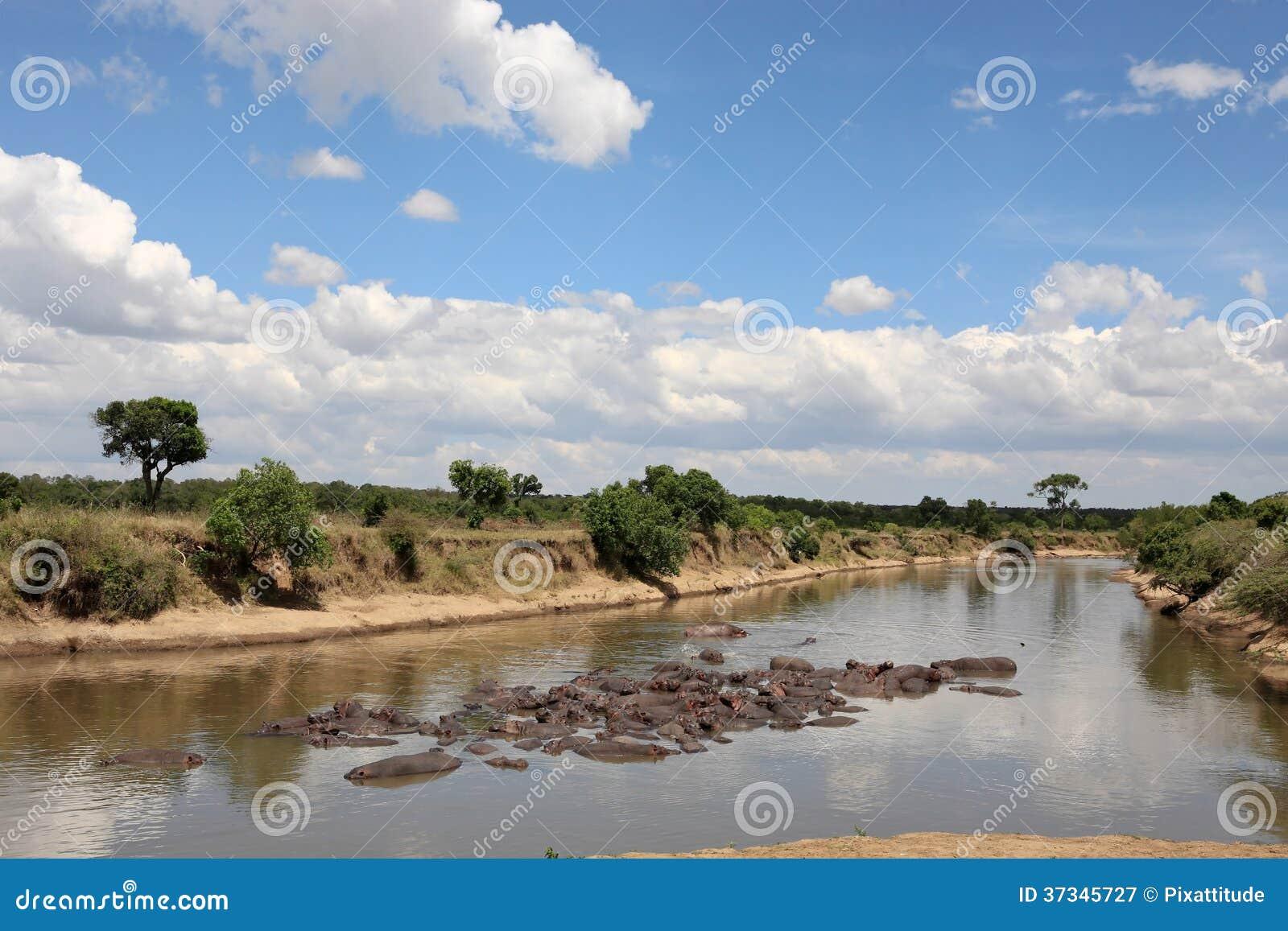 Flodhästmasaimara flod Kenya