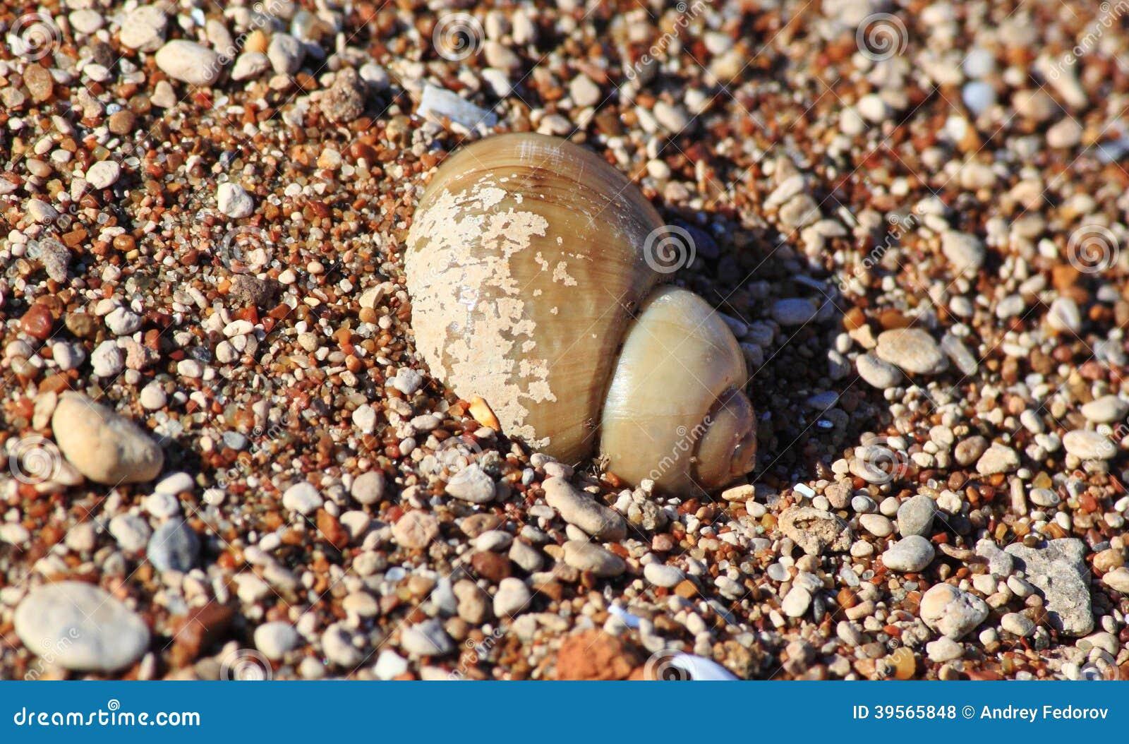 Flodvask i sanden