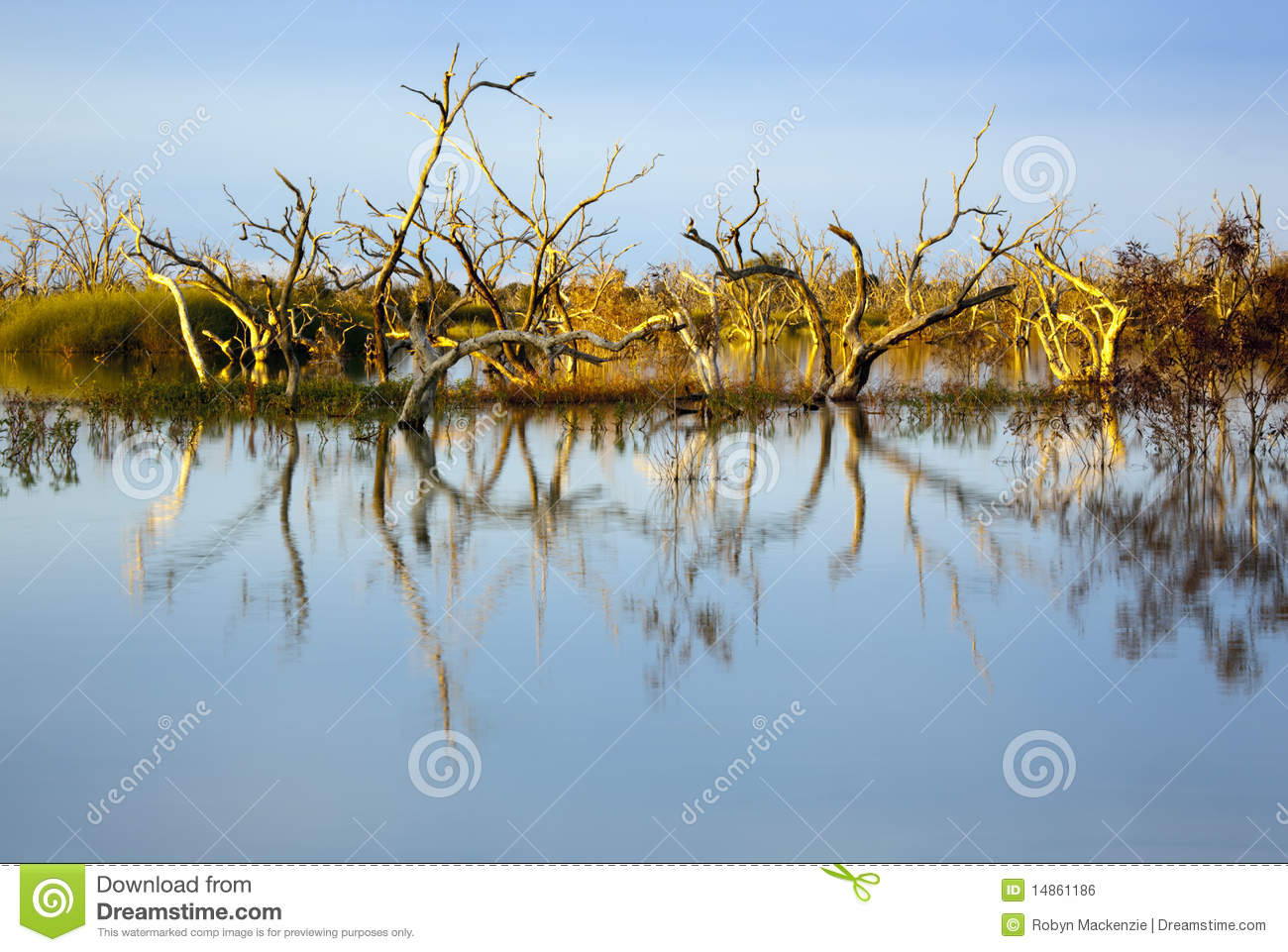 Flooded Trees at Sunset