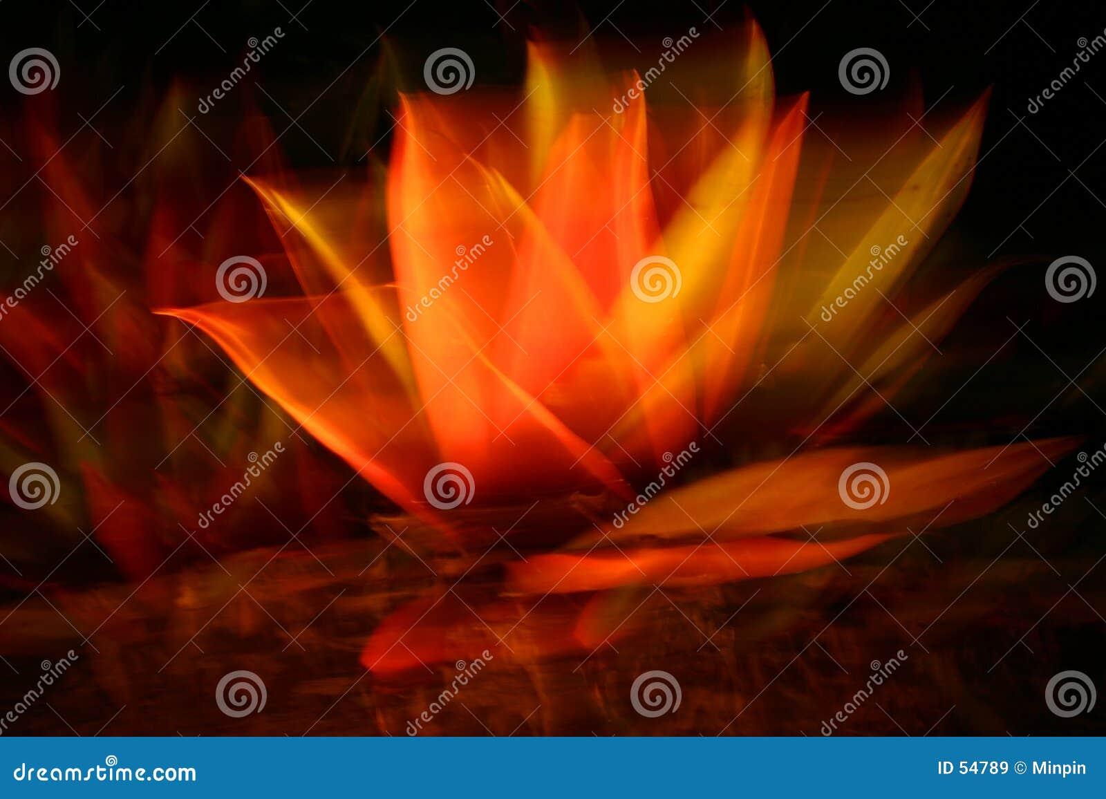 Flor abstrata na meia-noite