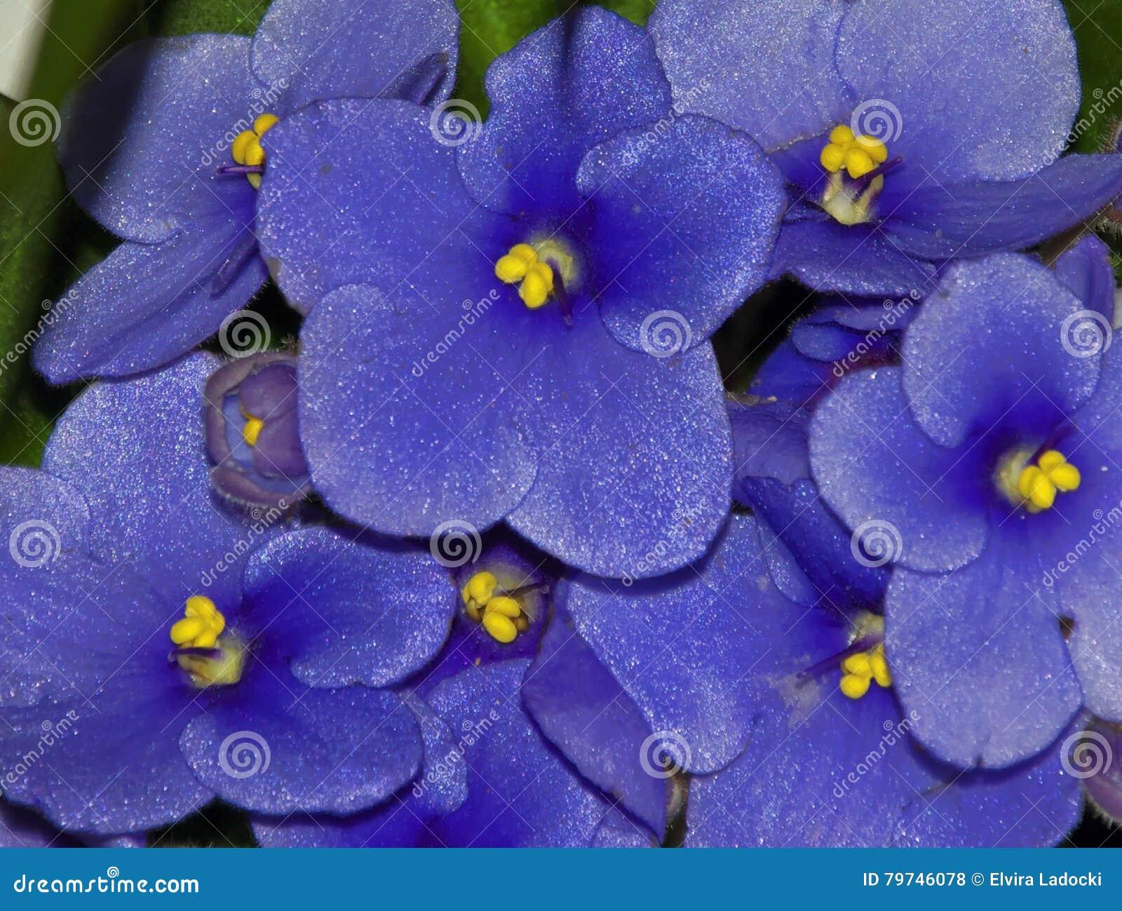 Flor agradable