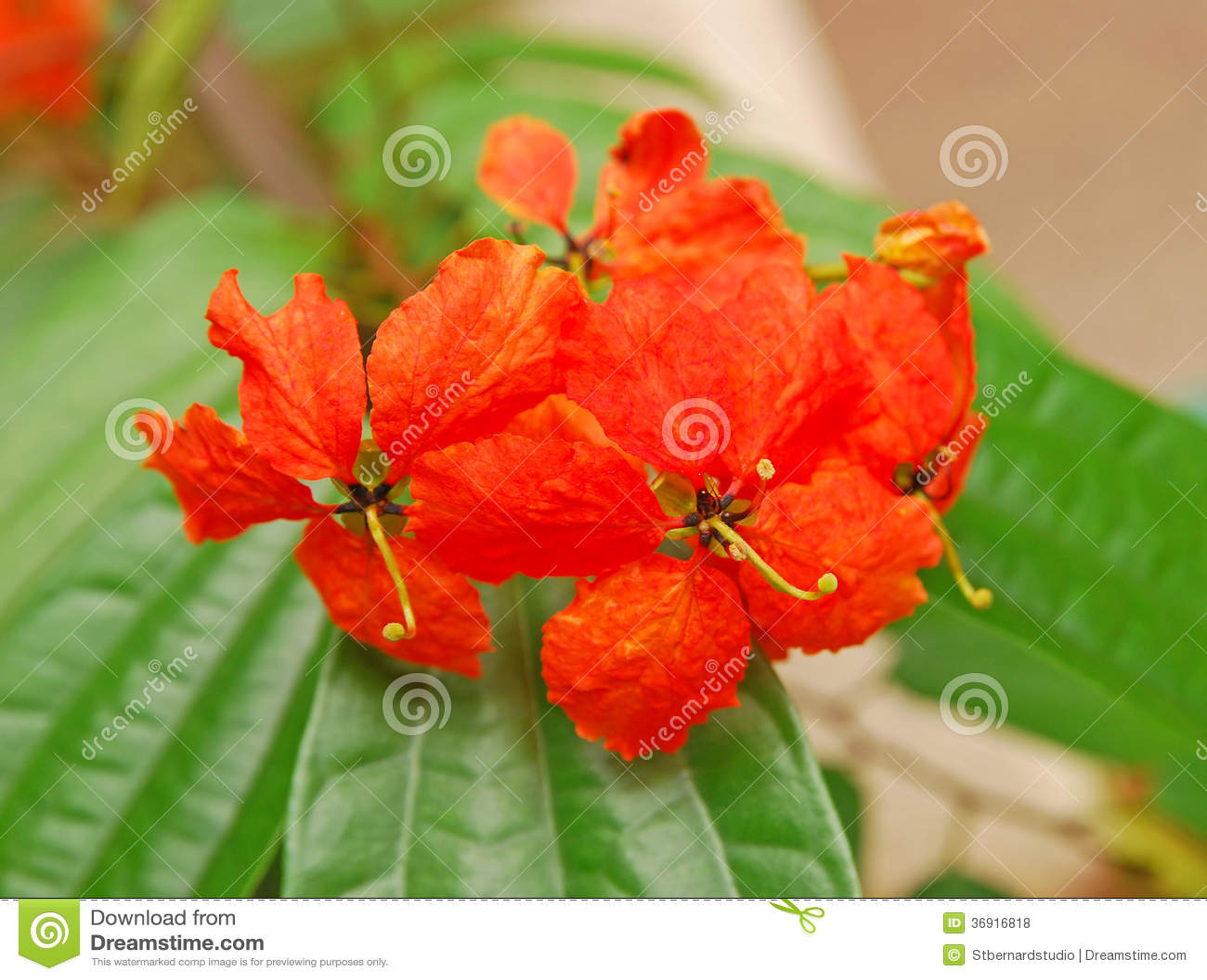 Flor alaranjada tropical