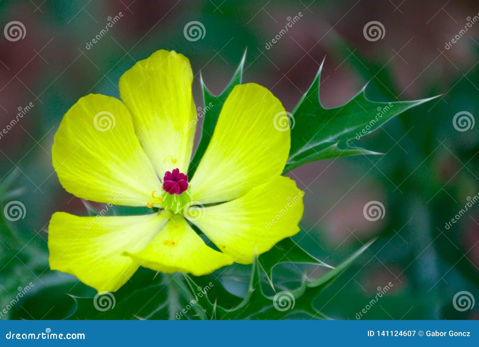 Flor amarela bonita com fundo verde