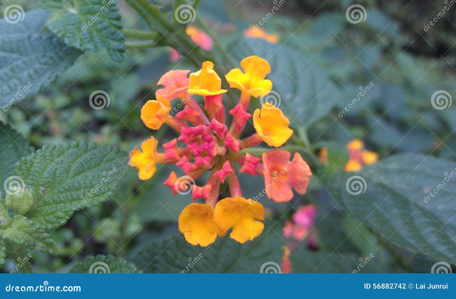 flor de jardim amarela:Flor amarela e vermelha