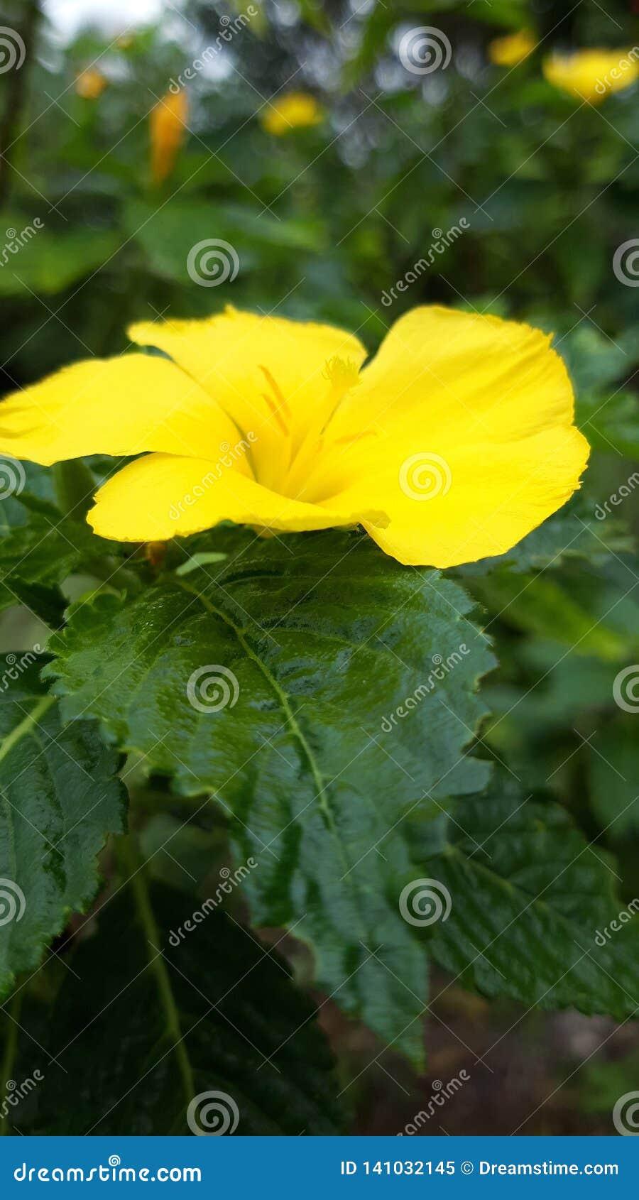 Flor amarela na flor