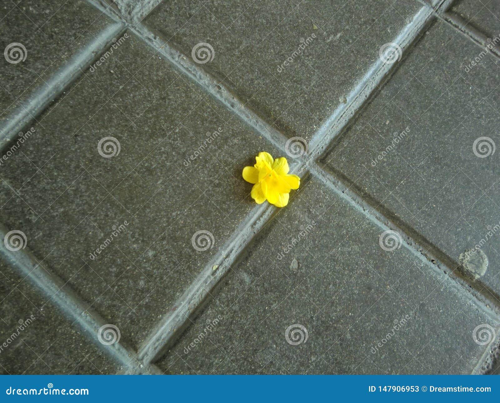 Flor amarela solitária pequena no pavimento