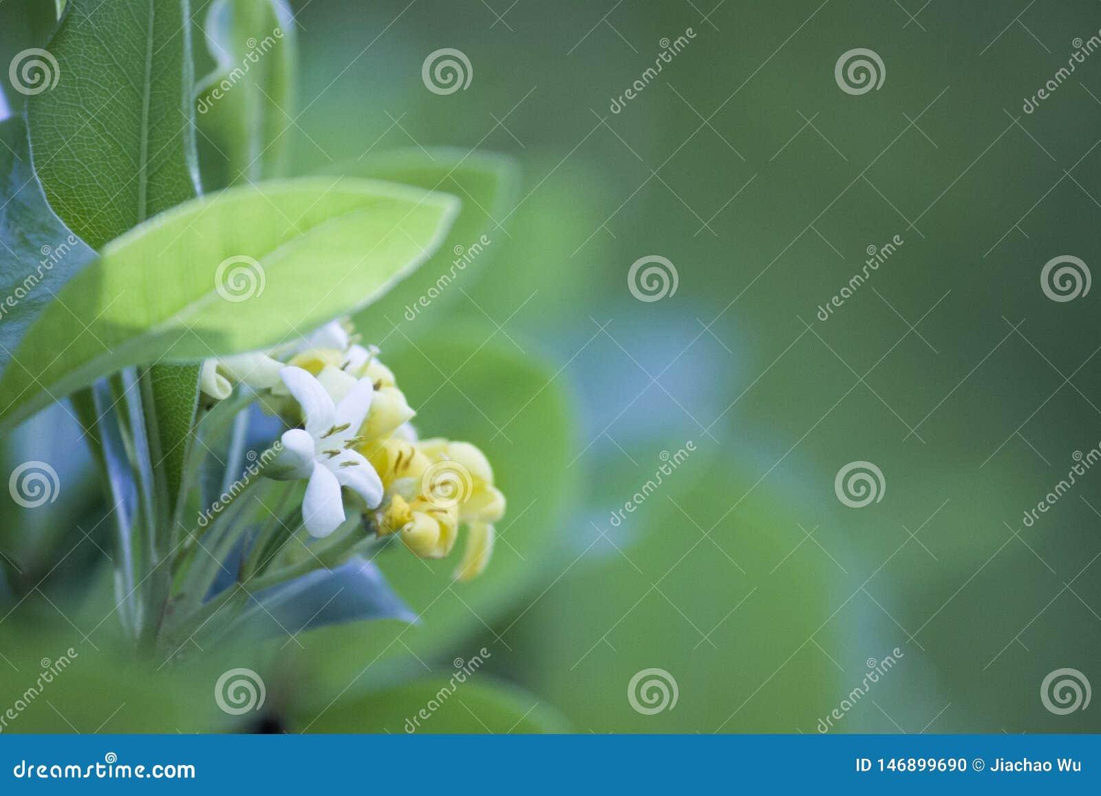 Flor amarilla con el fondo verde