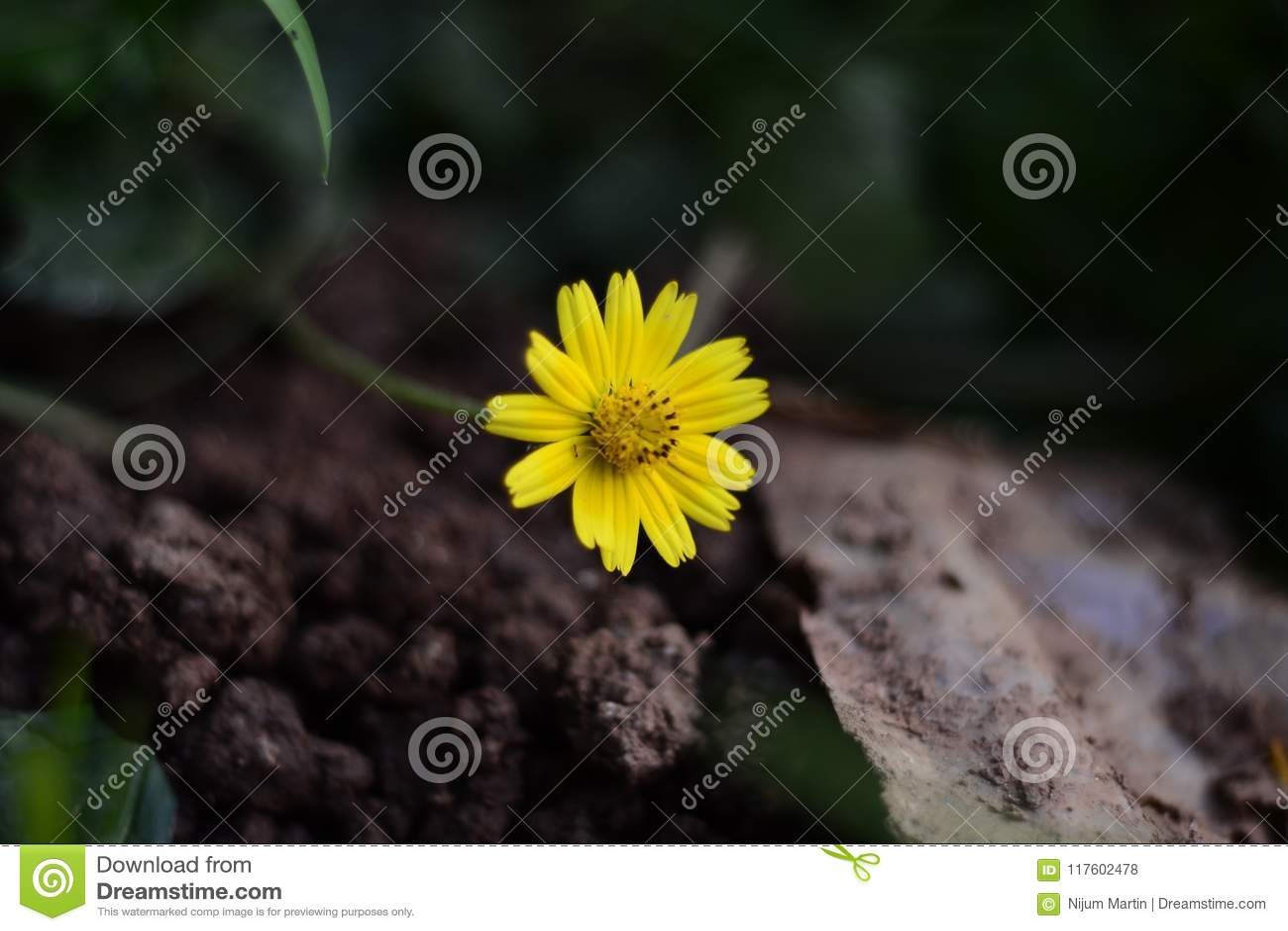 Flor Amarilla De La Flor | Definición, Anatomía Stock de ilustración ...