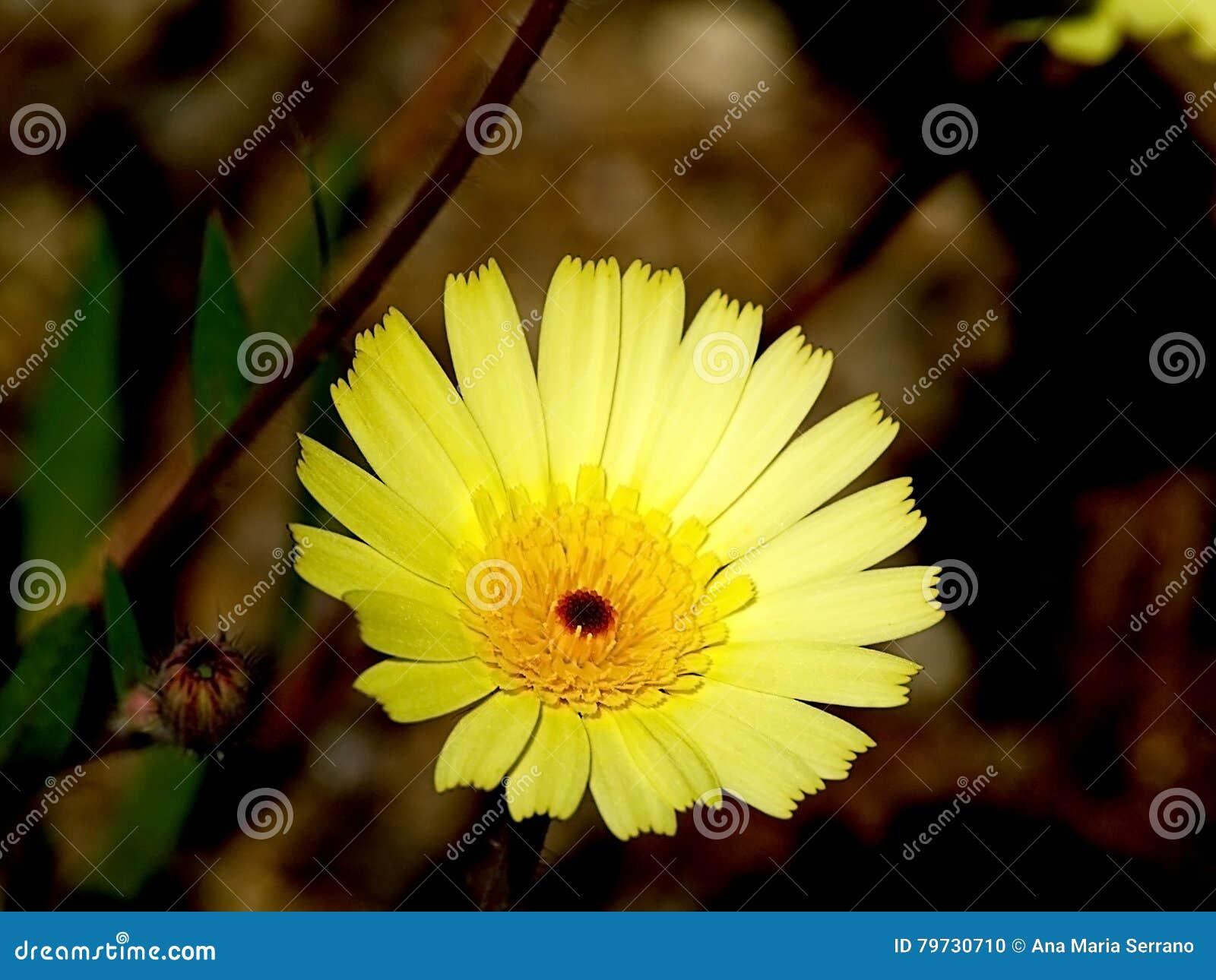 Flor amarilla el primavera