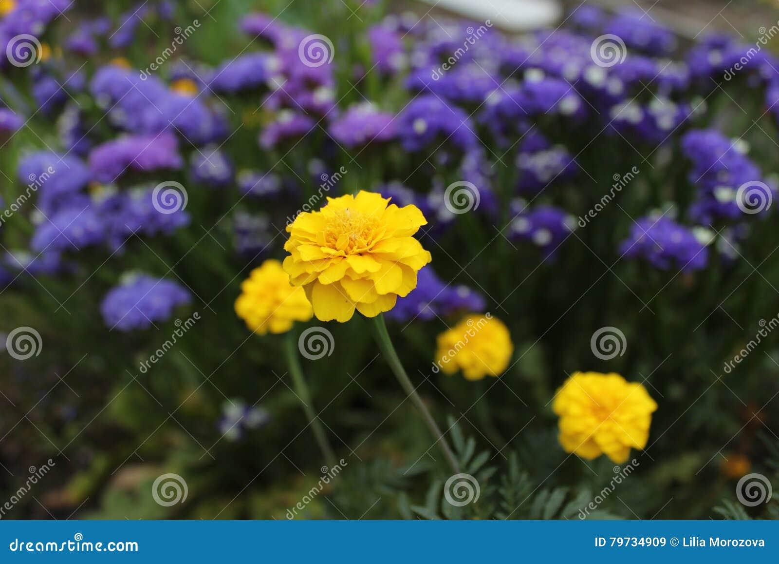 Flor amarilla en cama azul
