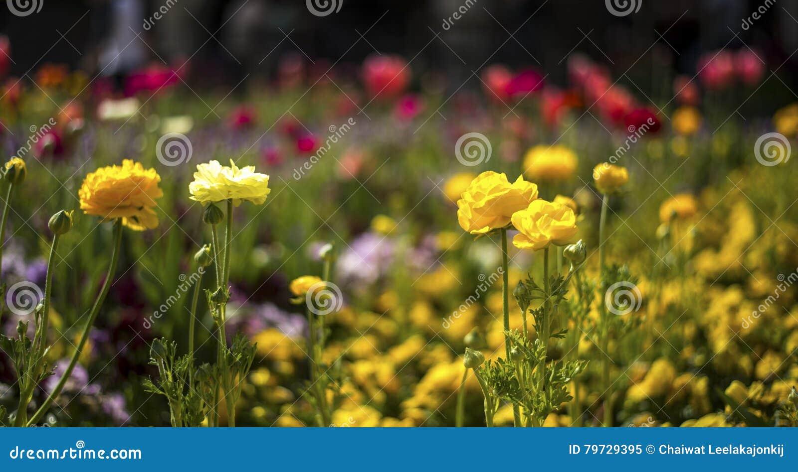 Flor amarillo de la flor