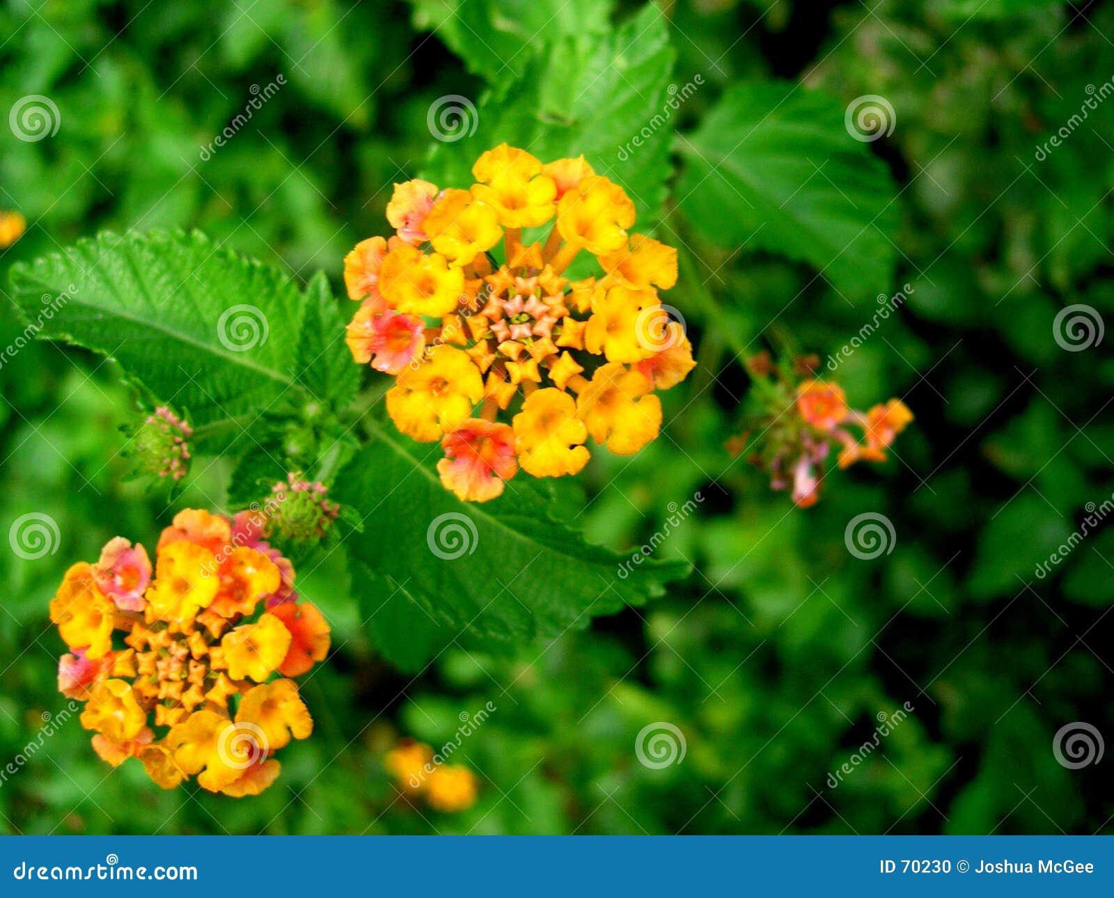 Flor anaranjada 2