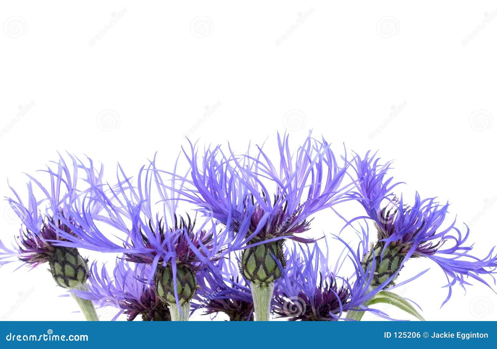 Flor azul 1