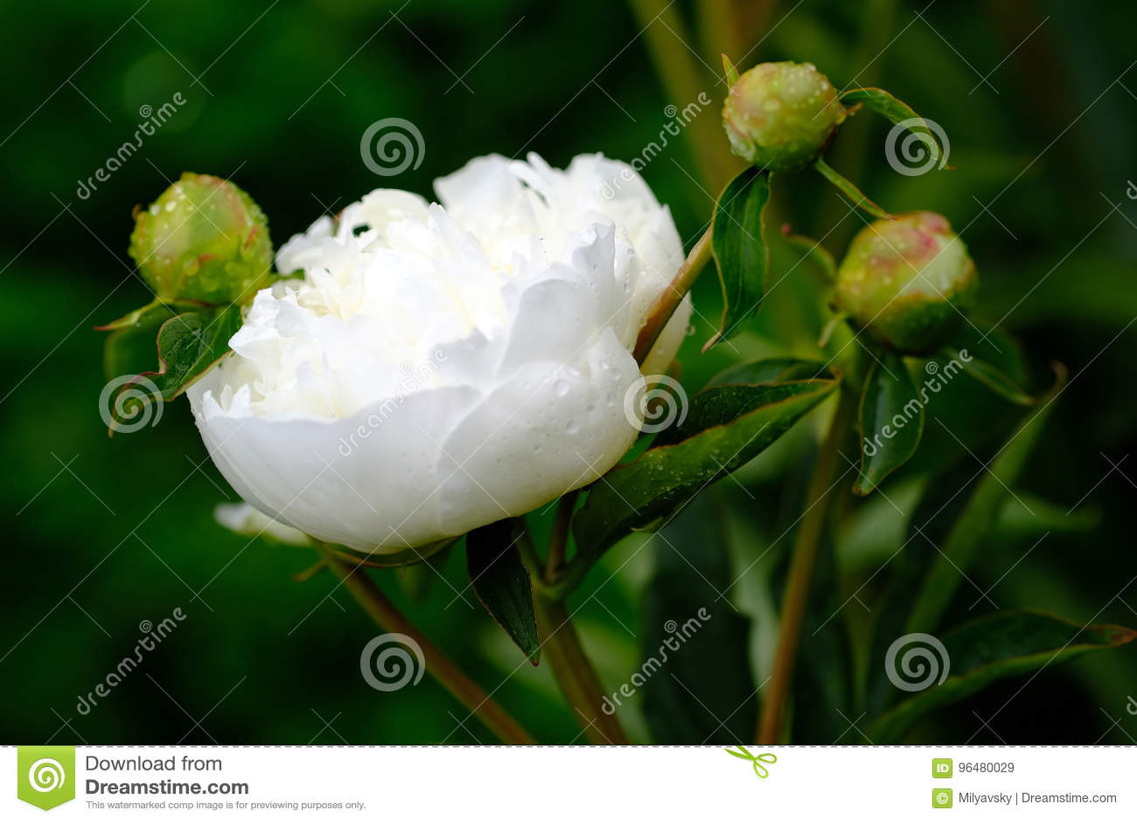 Flor blanca blanda