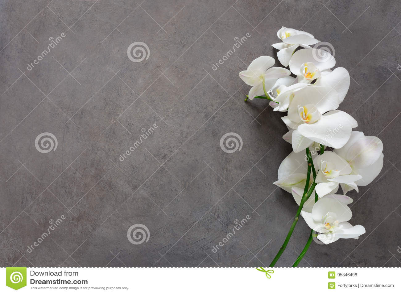 Flor blanca de la orquídea en la floración