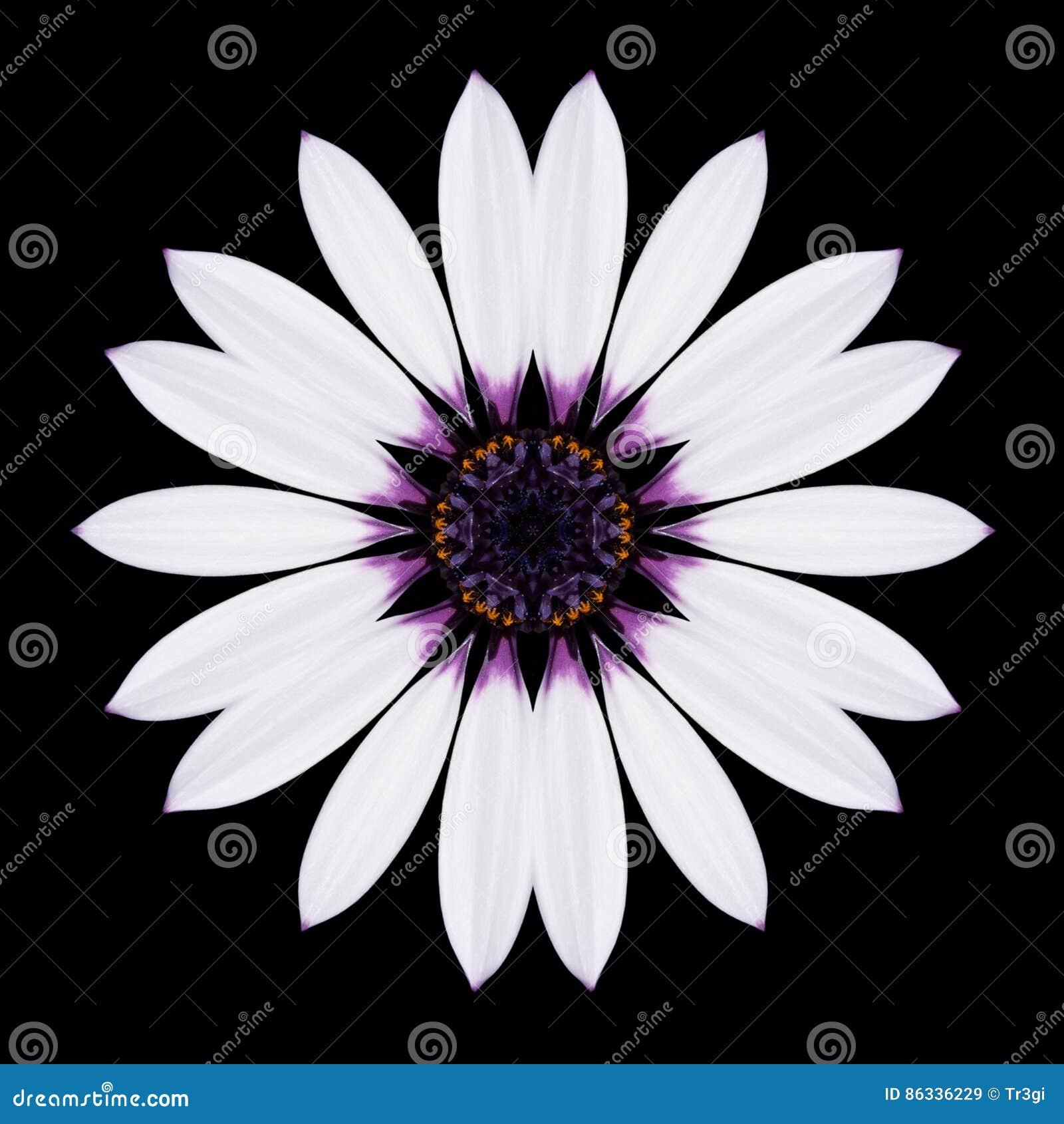 Flor blanca Mandala Kaleidoscope Isolated en negro