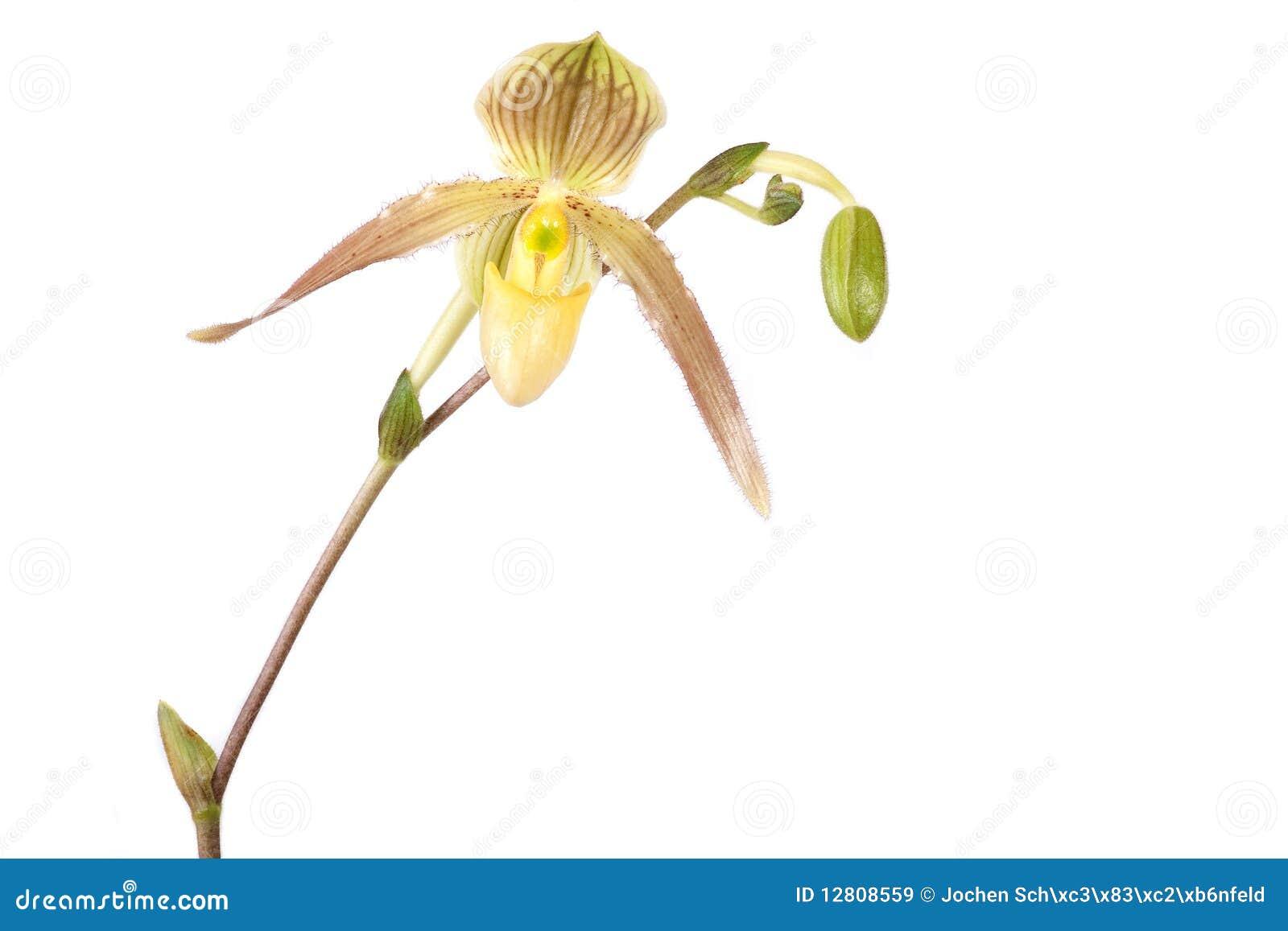 Flor bonita de uma orquídea